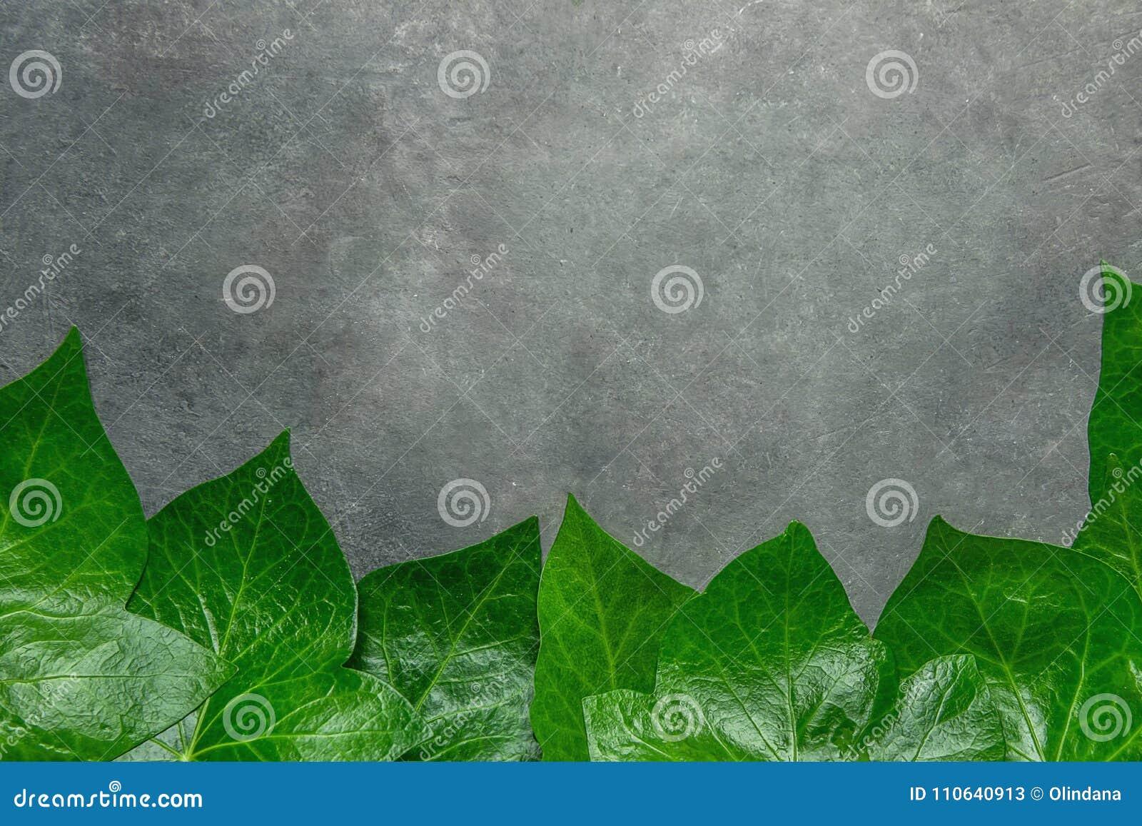 Teste padrão bonito de Ivy Leaves Forming Frame Border verde fresca no fundo de pedra escuro Anúncio do cartão do cartaz da bande