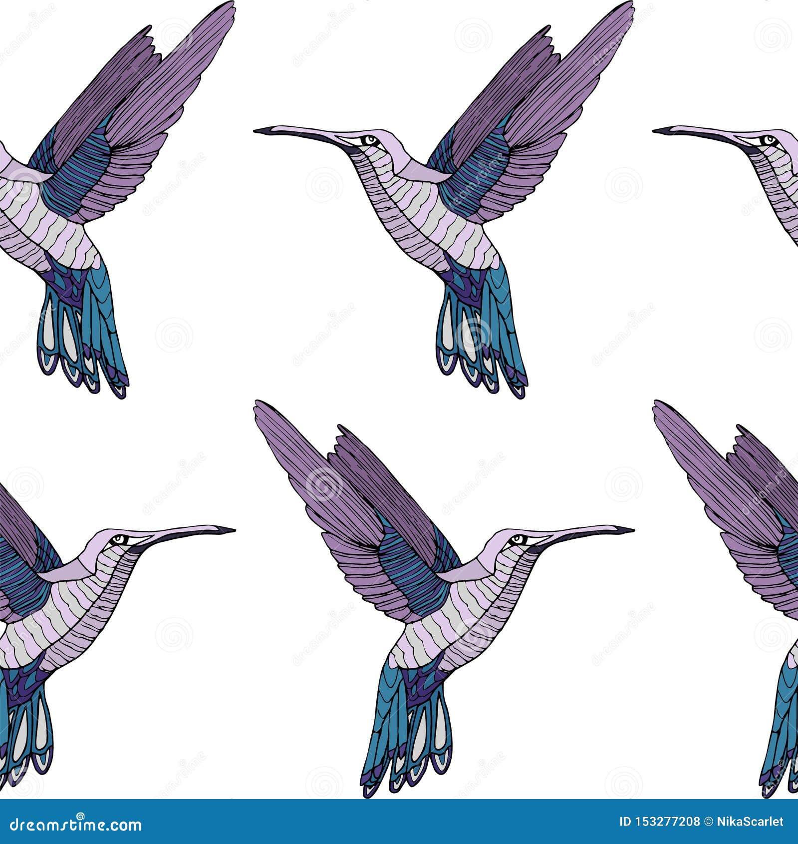 Teste padrão colorido do pássaro do colibri