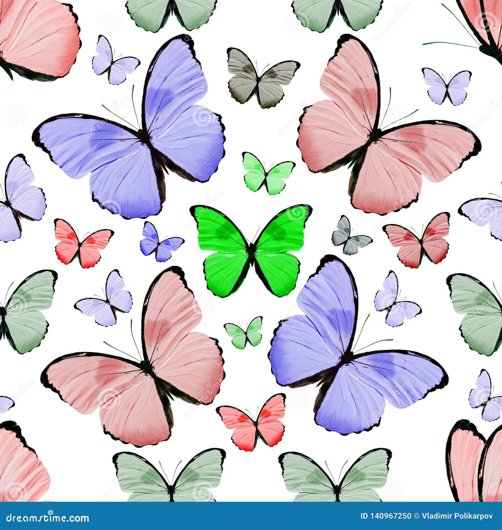 Teste Padrão Com As Borboletas Coloridas Naturais Bonitas