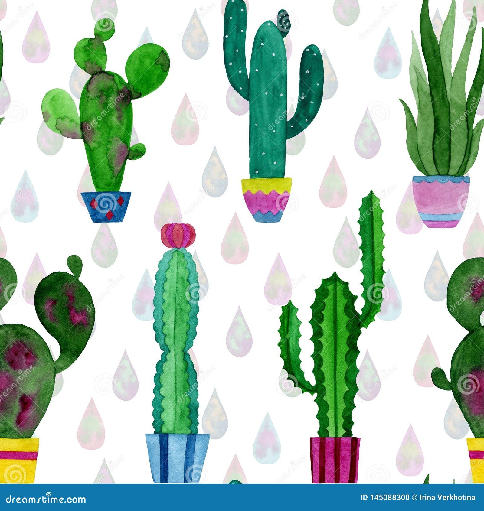 Teste padrão da aquarela dos cactos e das flores das plantas carnudas