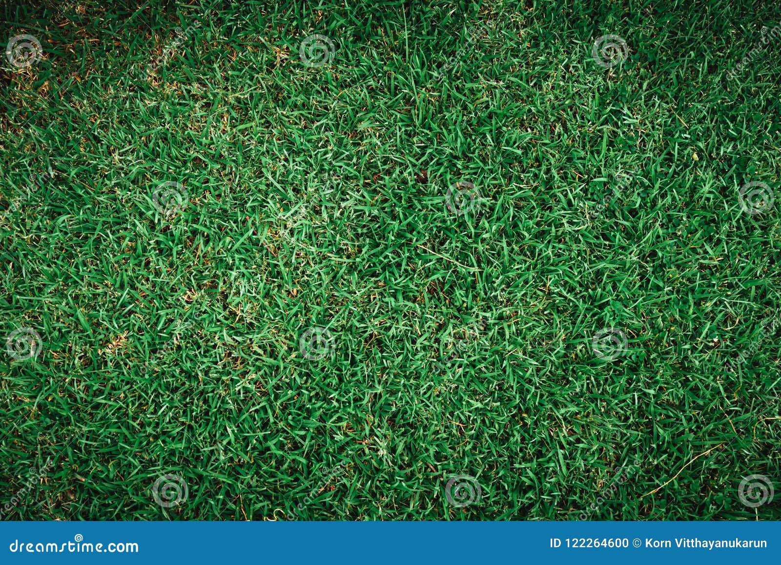 Teste padrão da textura do campo da opinião superior de grama verde