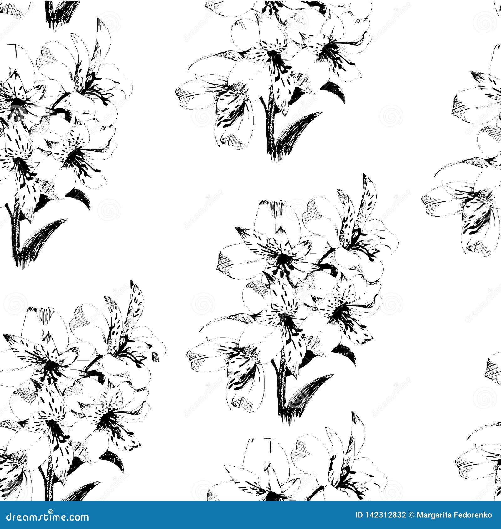 Teste padrão sem emenda com as flores do lírio do esboço, decoração floral preto e branco Ilustração do vetor