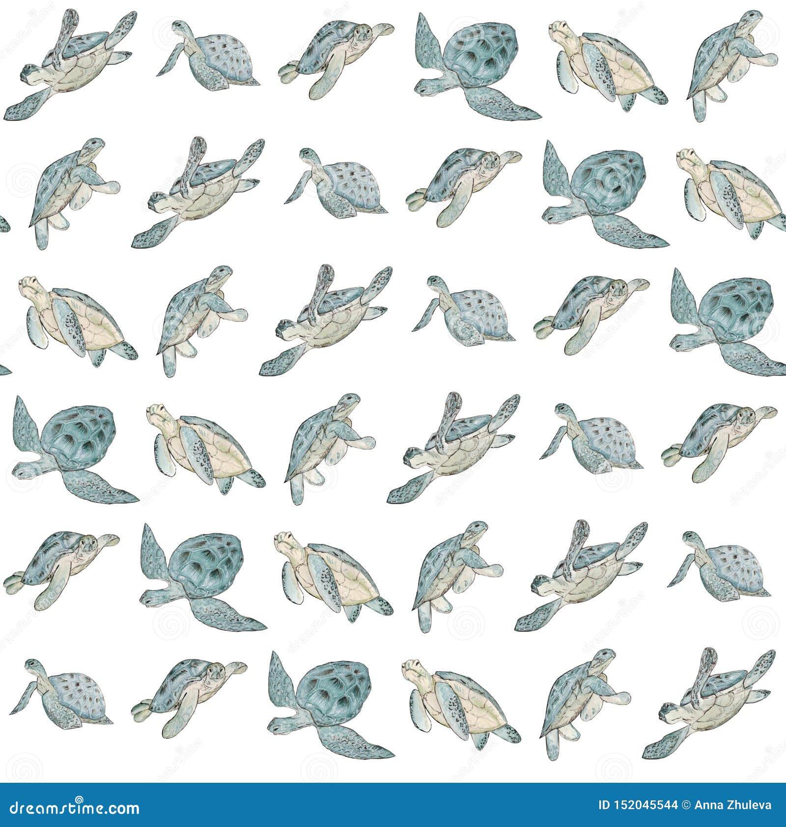 Teste padrão sem emenda com a tartaruga de mar da aquarela no fundo branco C?pia ex?tica do ver?o