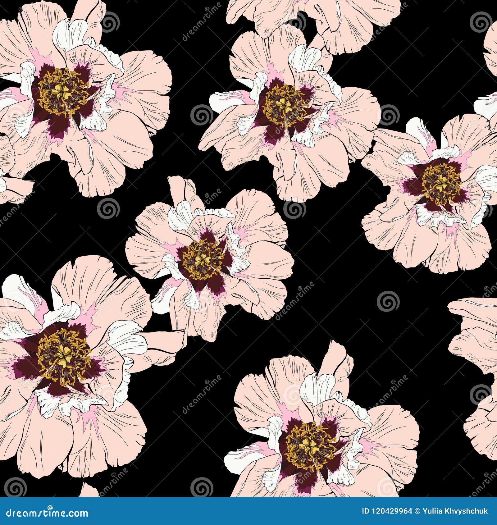 Teste padrão sem emenda da flor da peônia do Wildflower isolado no fundo preto