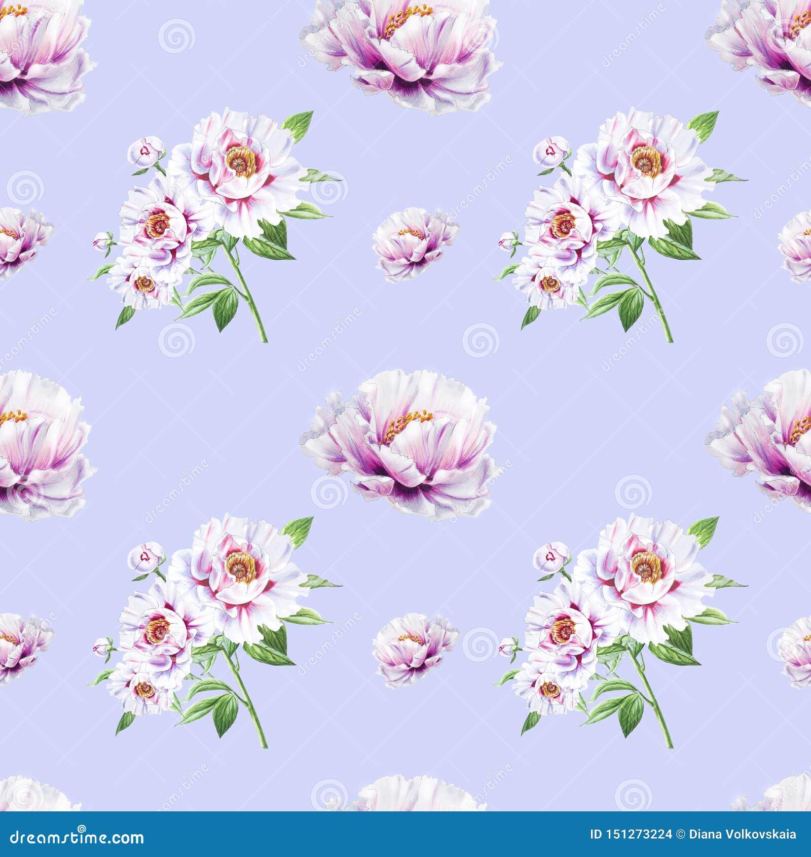 Teste padrão sem emenda da peônia branca bonita Ramalhete das flores Textura floral Desenho do marcador
