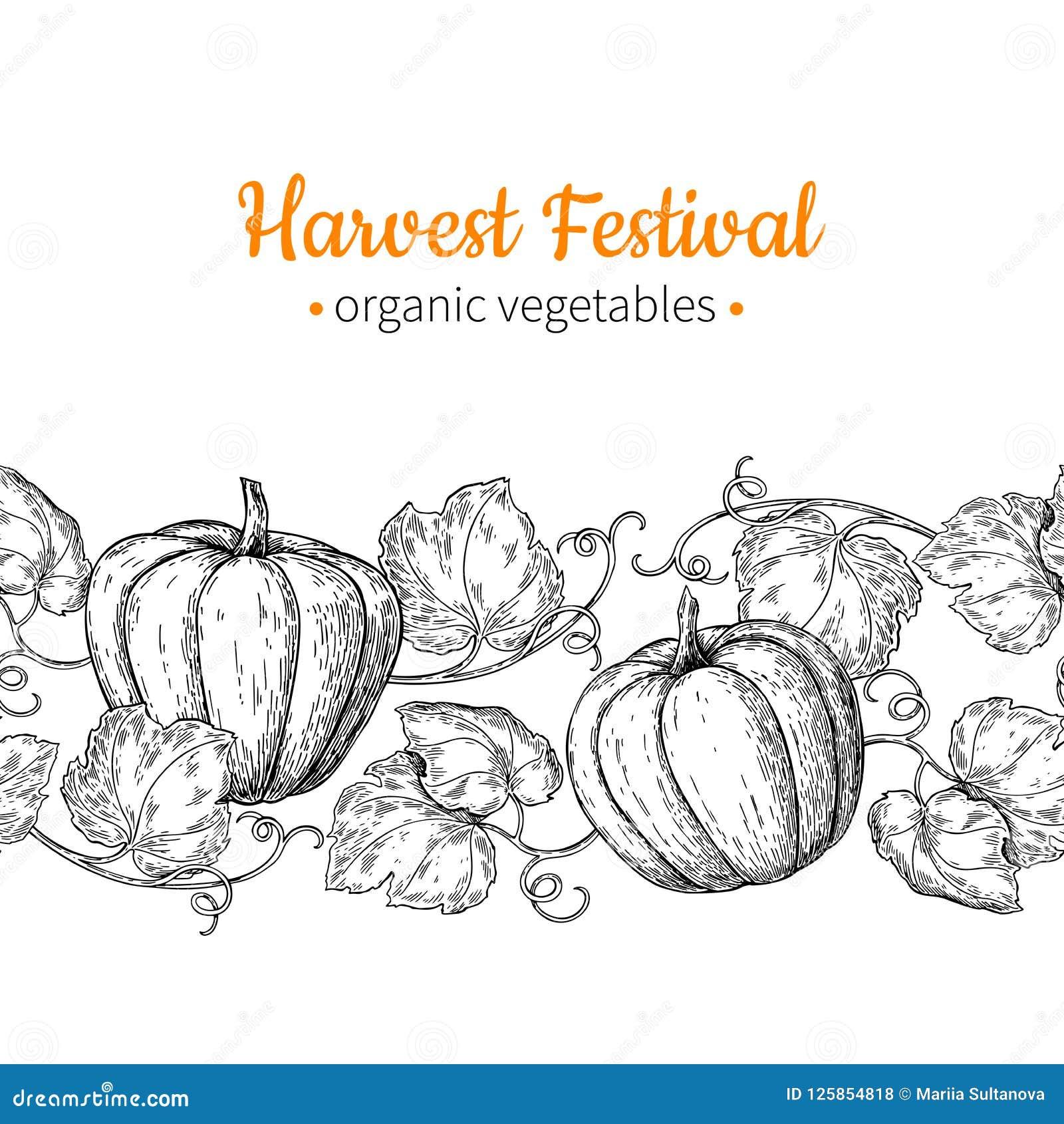 Teste padrão sem emenda do vetor da abóbora Beira tirada mão do vintage Ilustração do festival da colheita