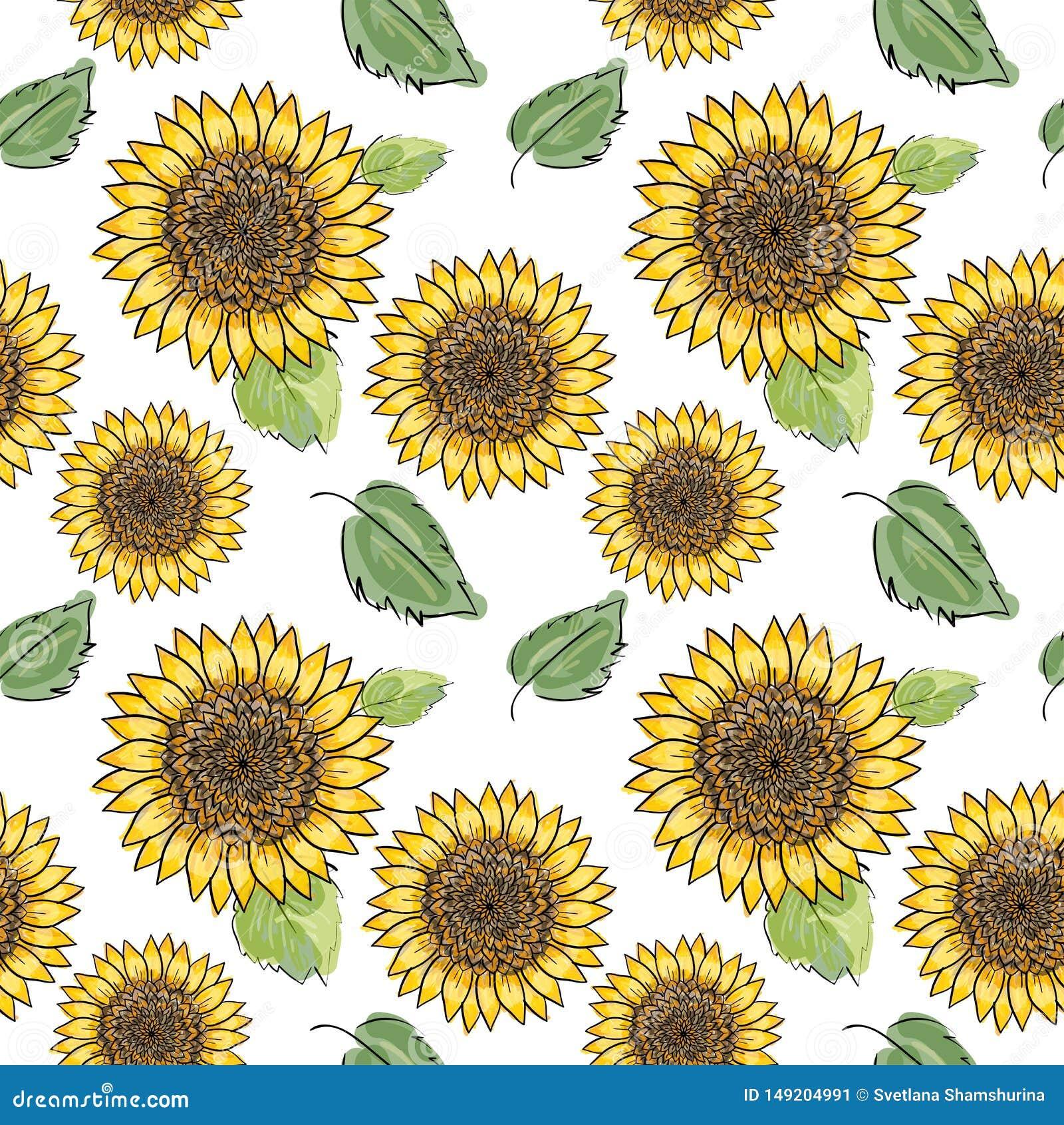Teste padrão sem emenda do vetor do girassol com folhas verdes, imitando a tinta e a aquarela no fundo branco Cabeças de flor des