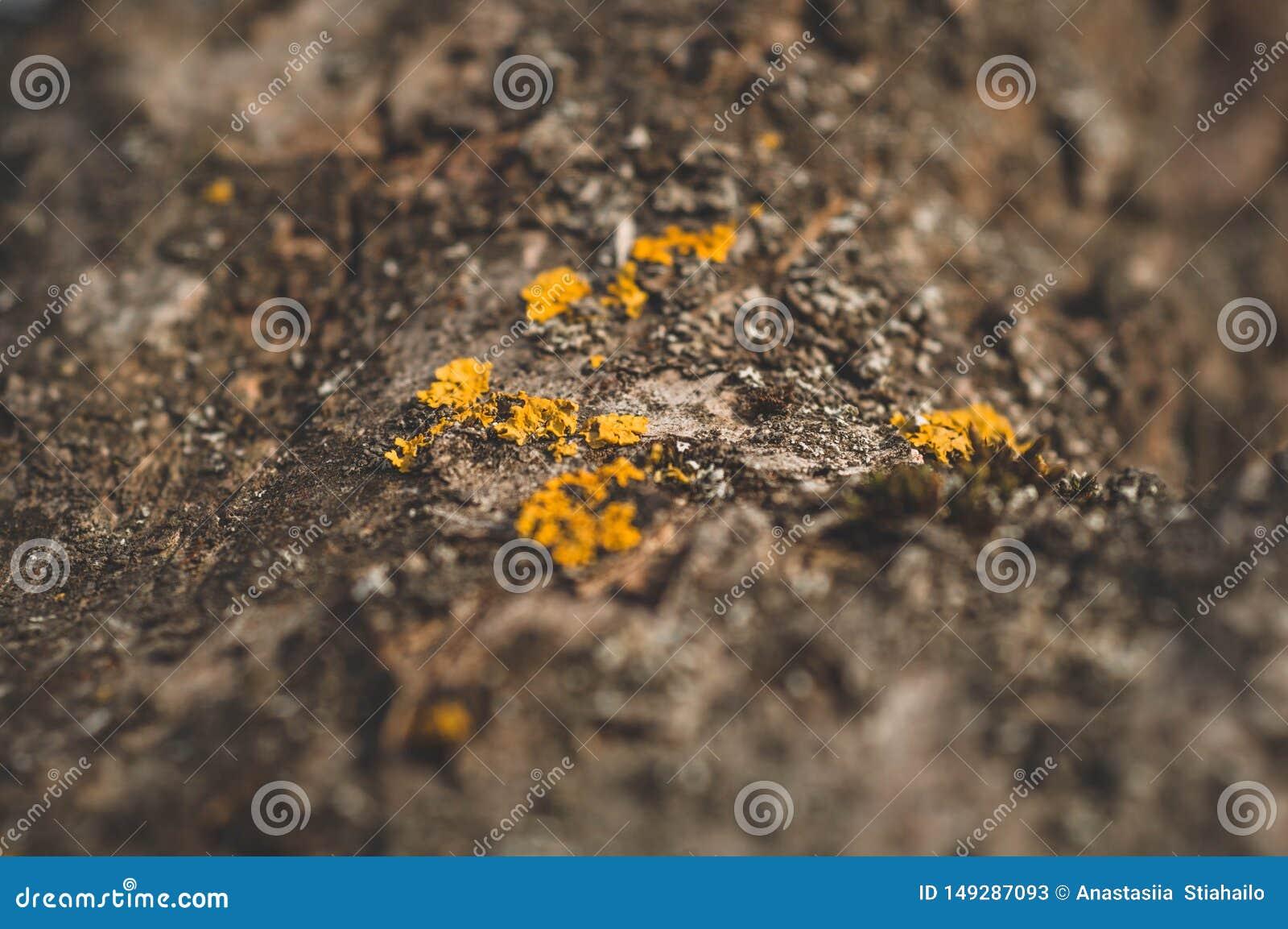 Teste padr?o do musgo e do fungo do l?quene que crescem em uma casca de uma ?rvore na floresta