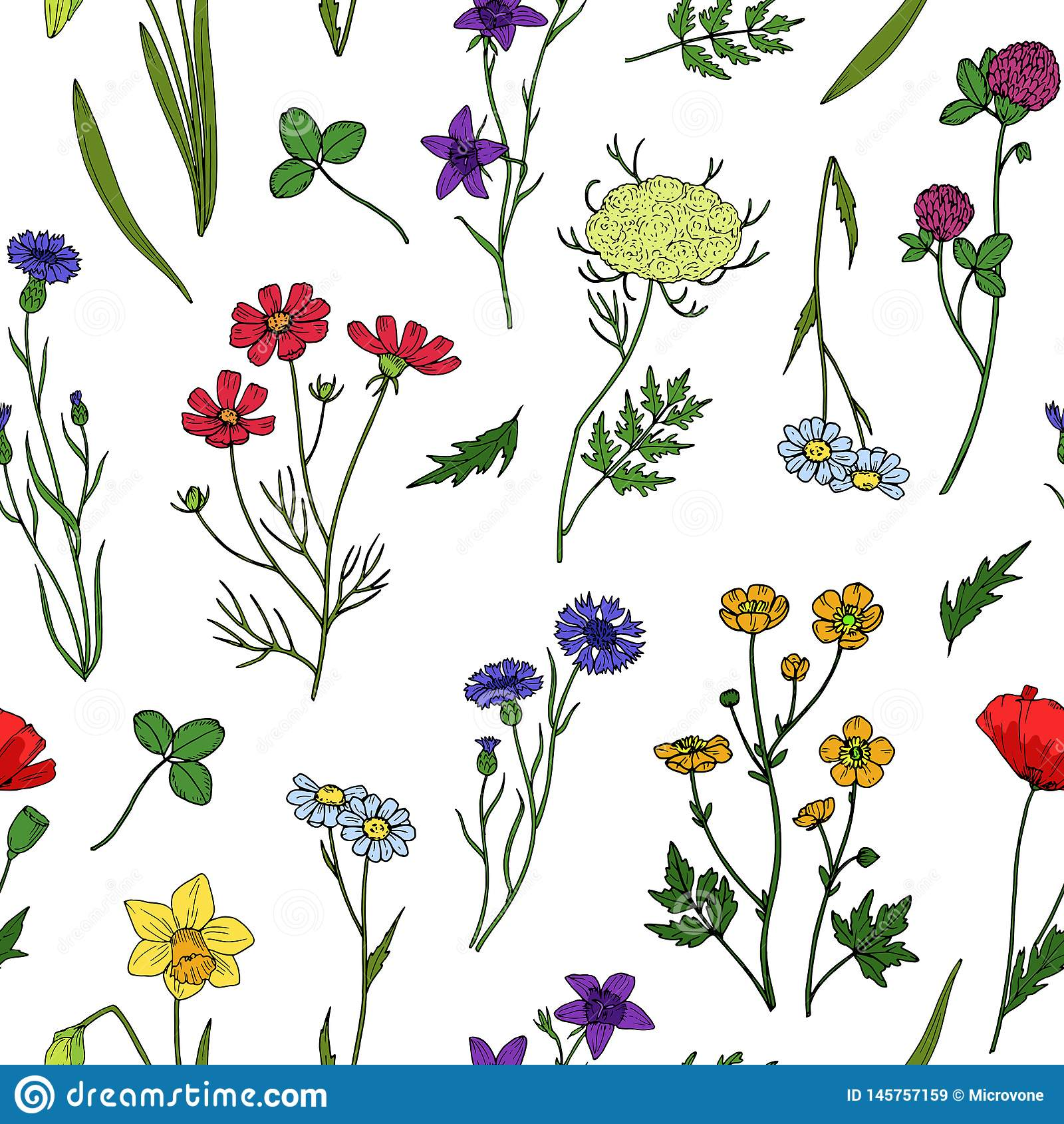 Teste padr?o sem emenda das flores selvagens Papel de parede floral do vintage do wildflower verão, textura botânica do vetor de