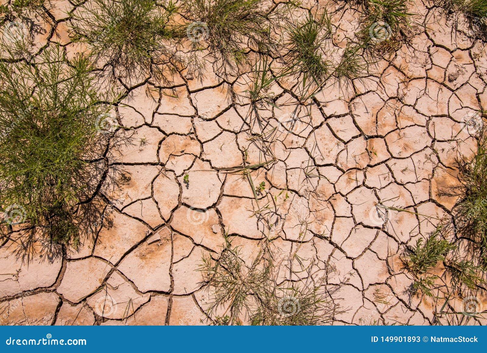 Testes padrões bonitos criados na lama/rocha e nos arbustos secados encontrados na região selvagem do parque nacional do ermo