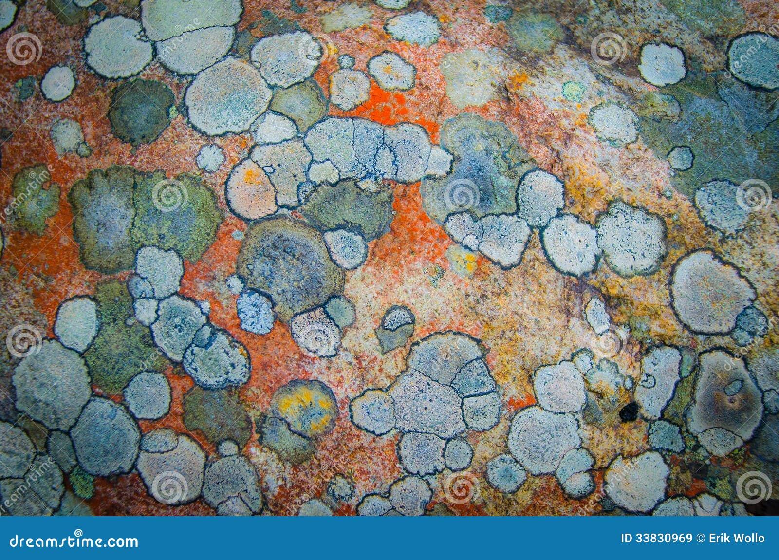 Testes padrões do musgo em uma pedra