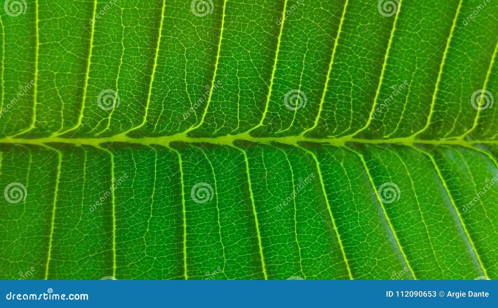 Testes padrões em uma folha