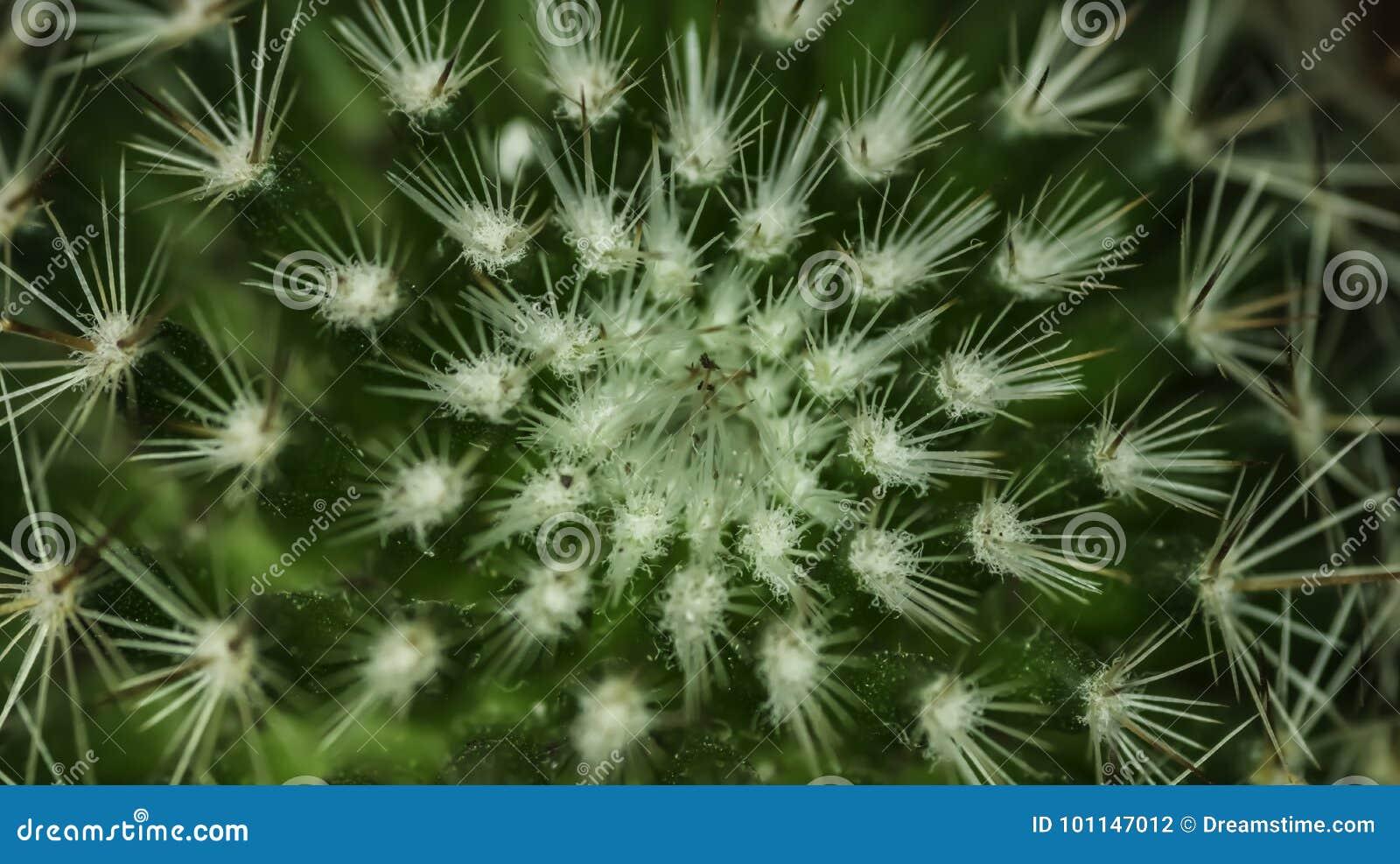 Testes padrões geométricos na natureza