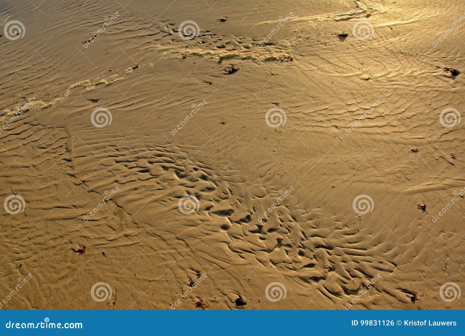 Testes padrões ondulados da areia na areia molhada na praia