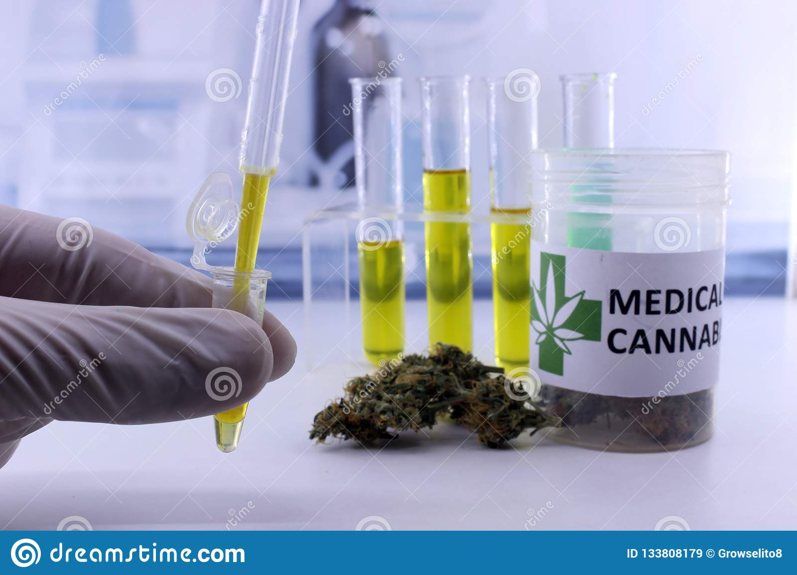 Testing marijuana buds for the extraction of cannabis oil