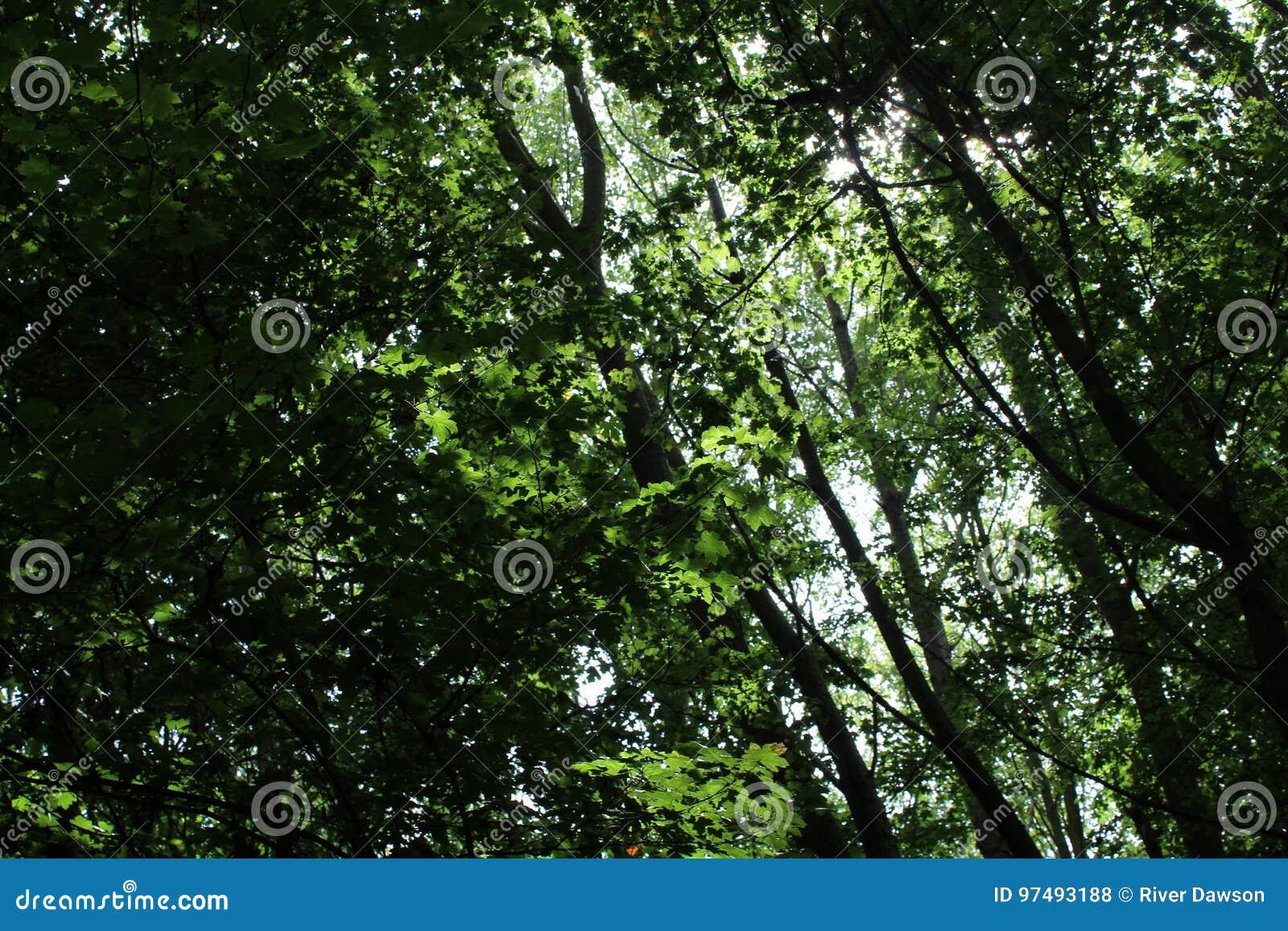 Tettoia in foresta