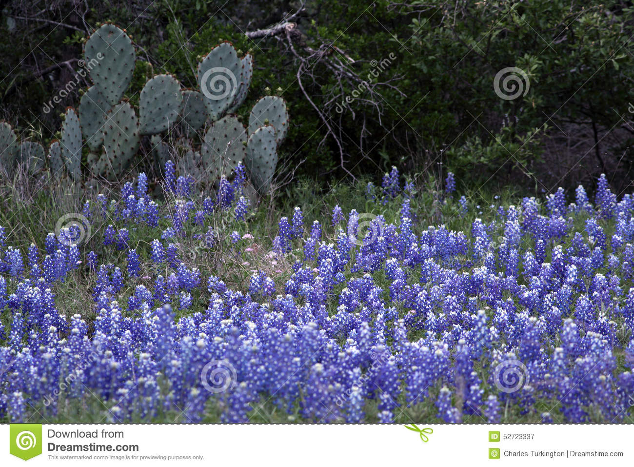 Bluebonnets Waterfall Pictures 51