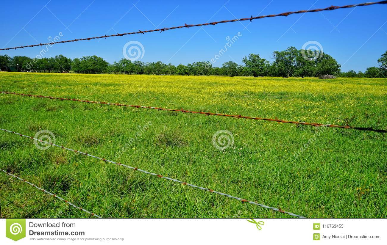 Texas Spring Flowers And Barbed Wire Stock Image Image Of Yellow