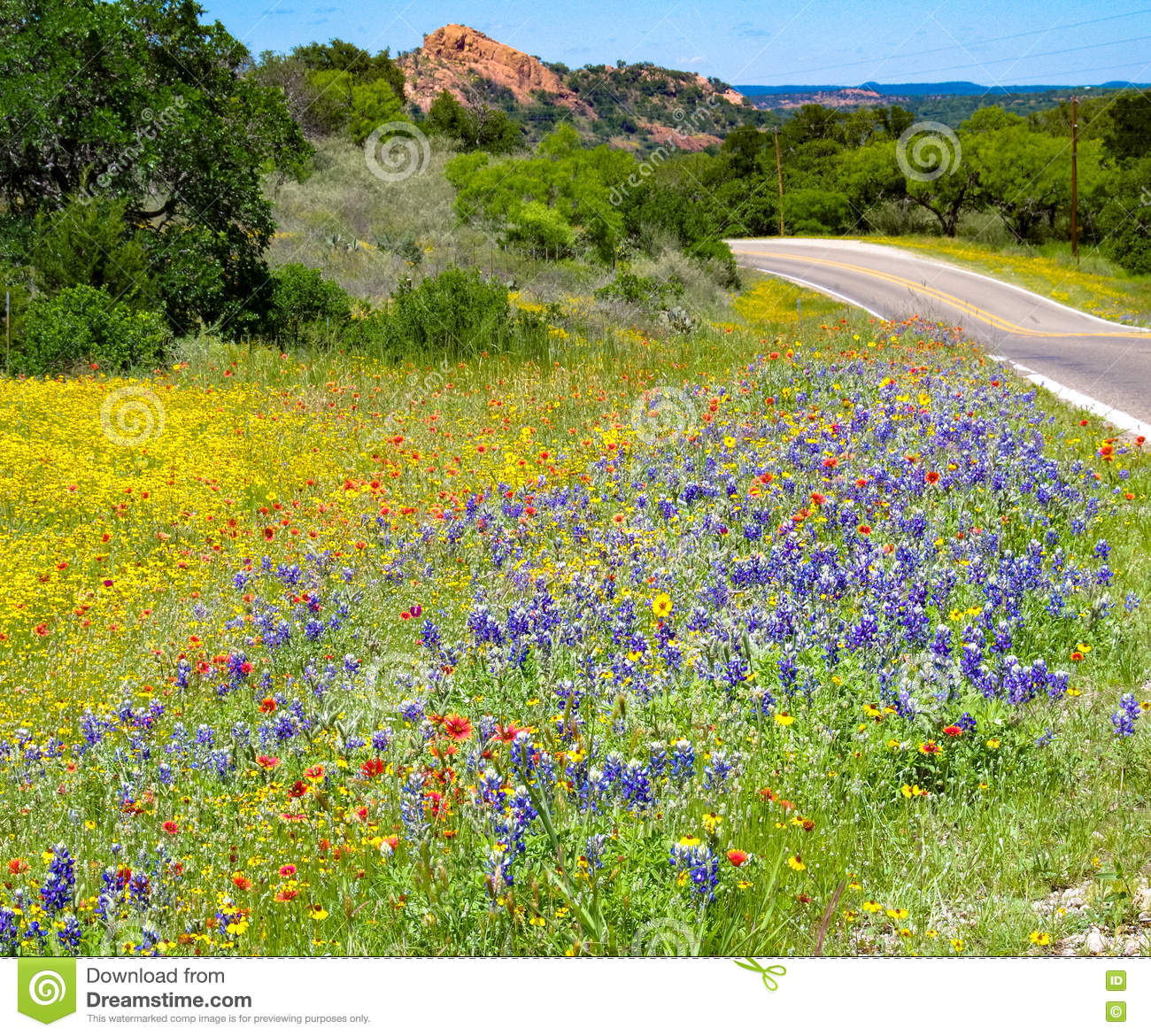 Texas Wildflowers Enchanted Rock