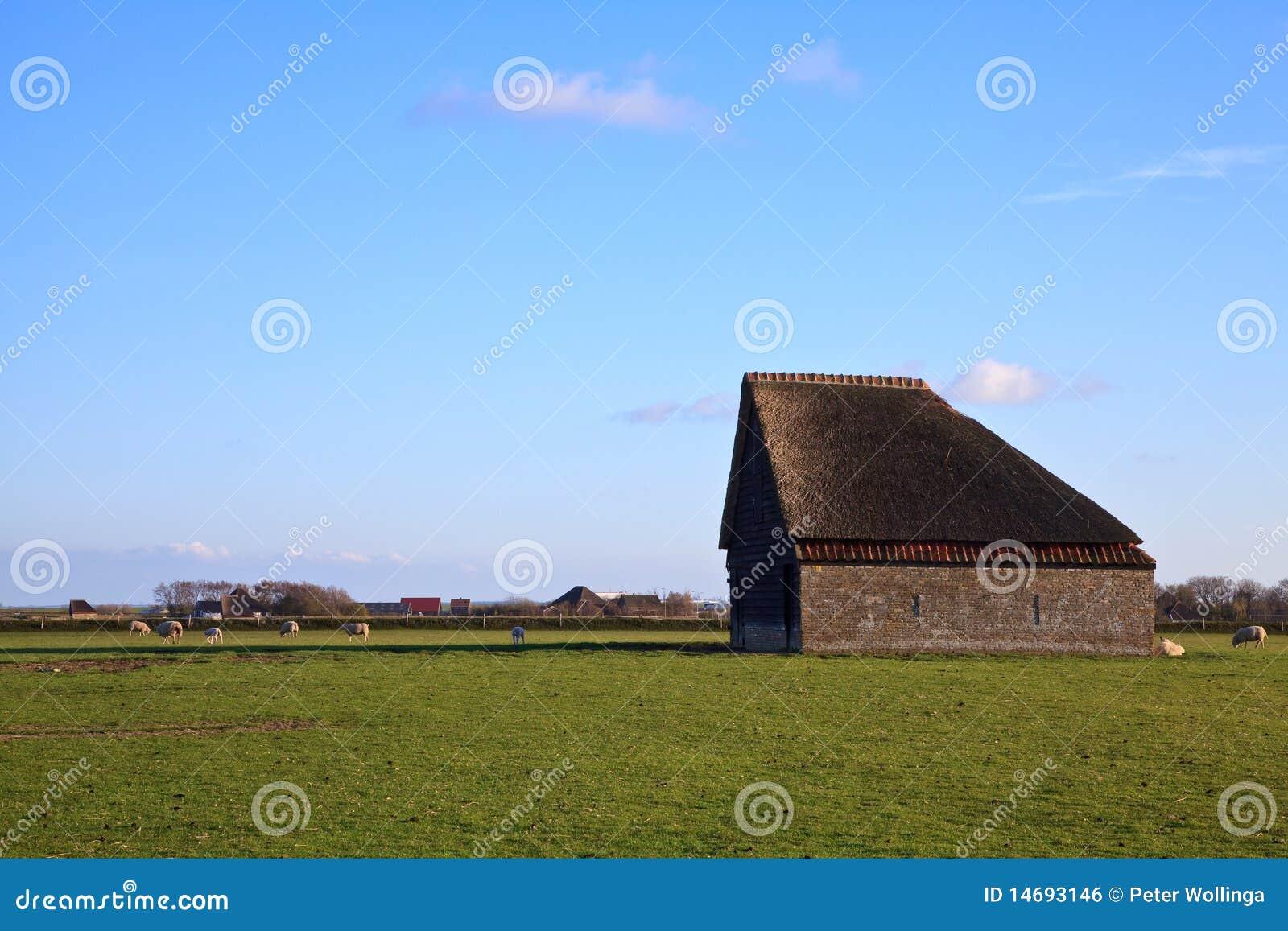 Texel овец амбара монументальное