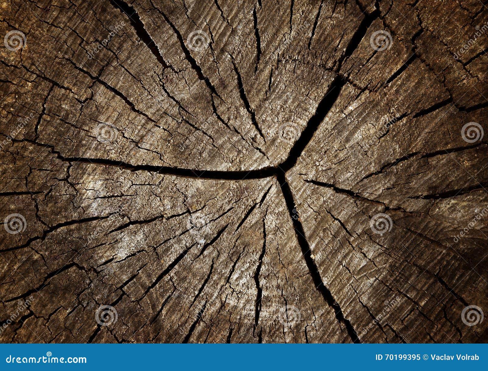 Textur av det gamla slutet för trädstubbe upp