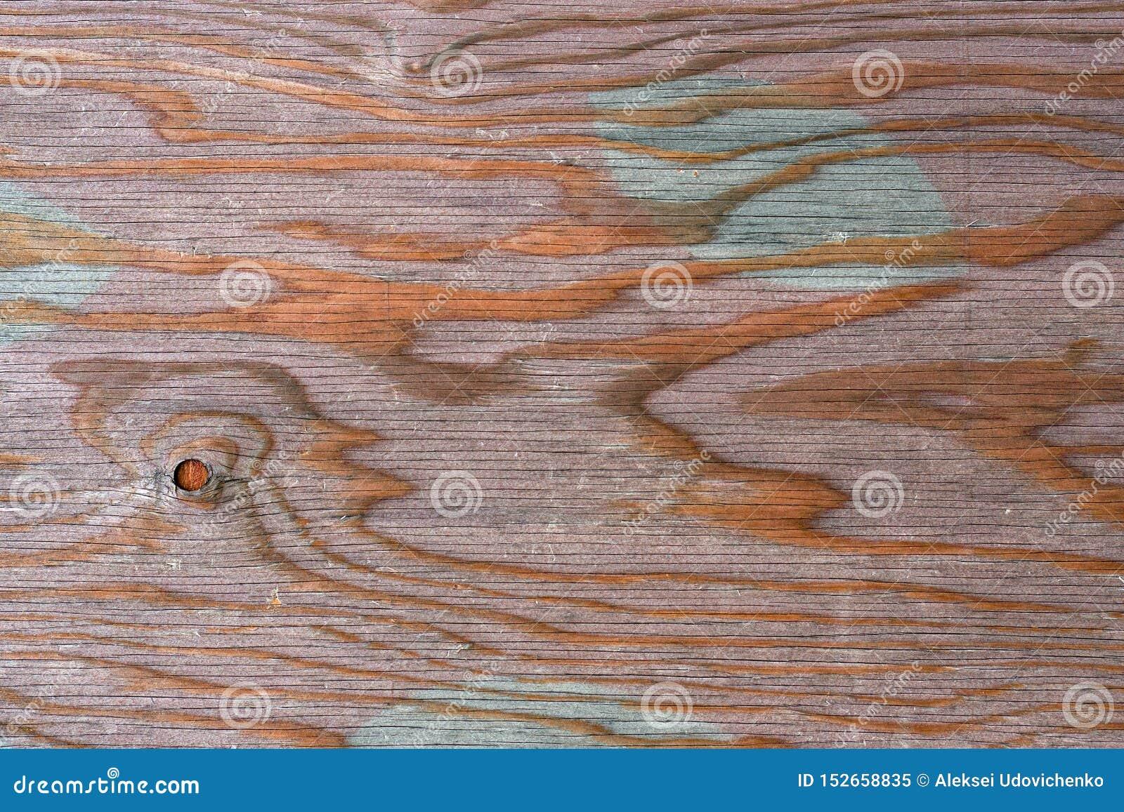 Textur av naturligt trä som målas med målarfärg