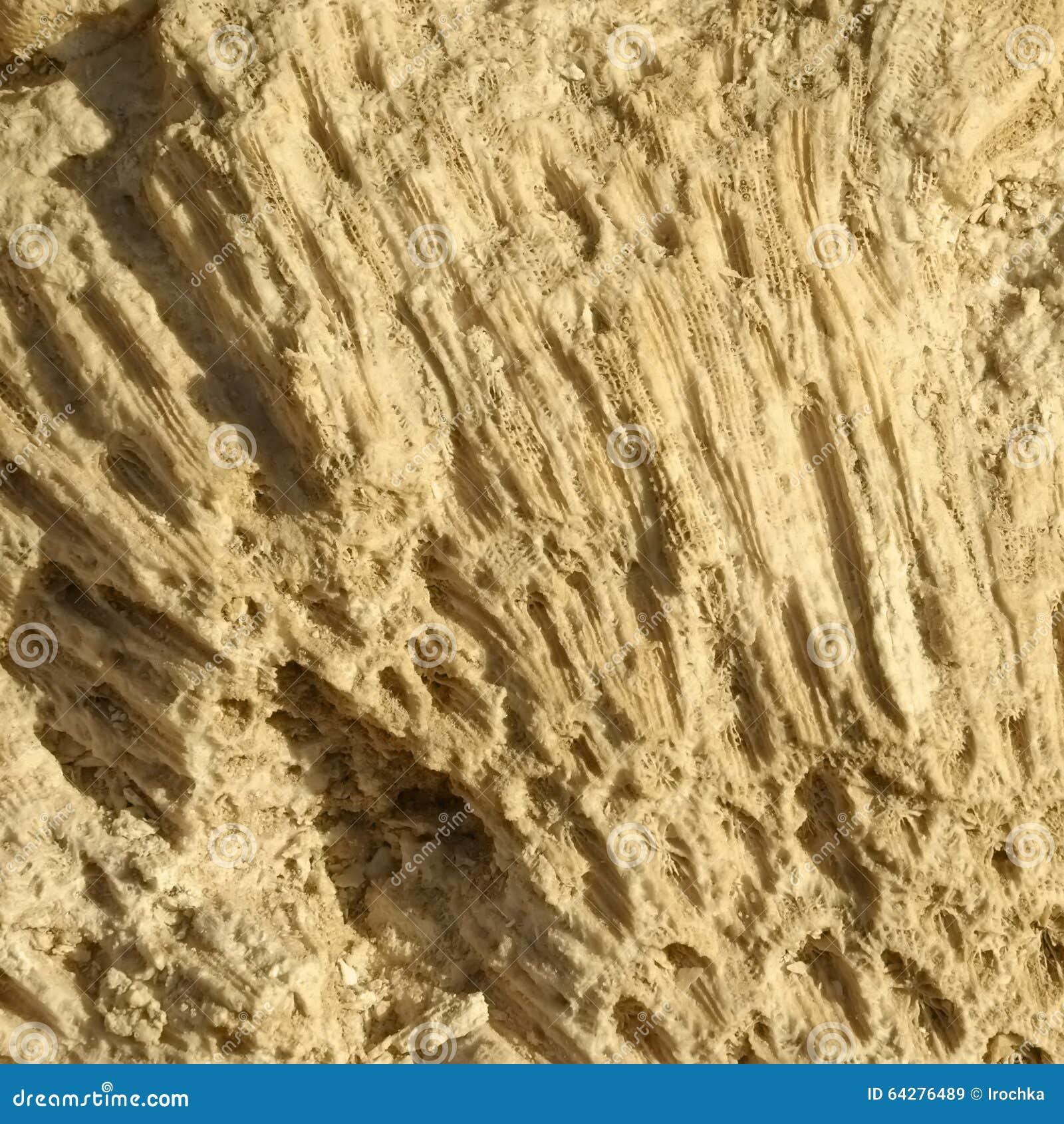 Textur bildade vid korallerna i kust- kalksten
