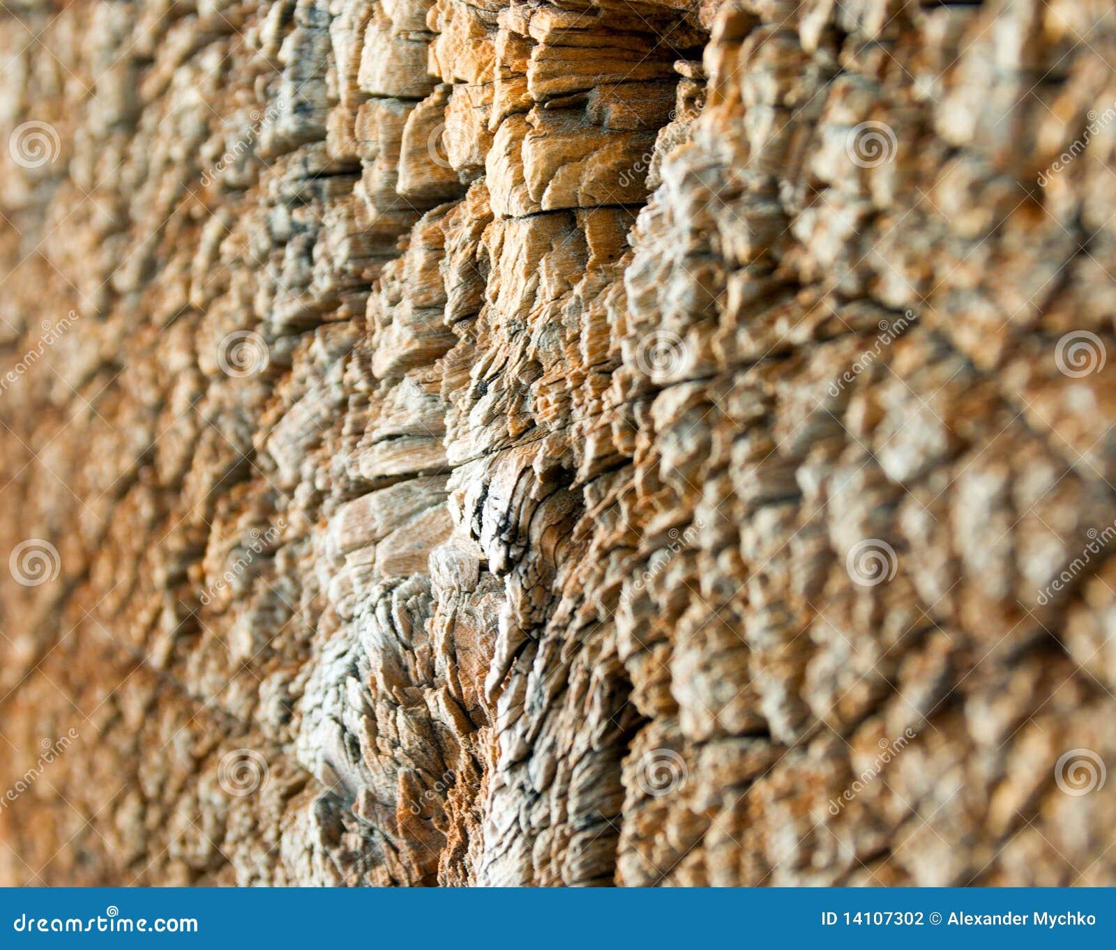 Textur di legno del taglio del primo piano fotografia for Piani principali del primo piano