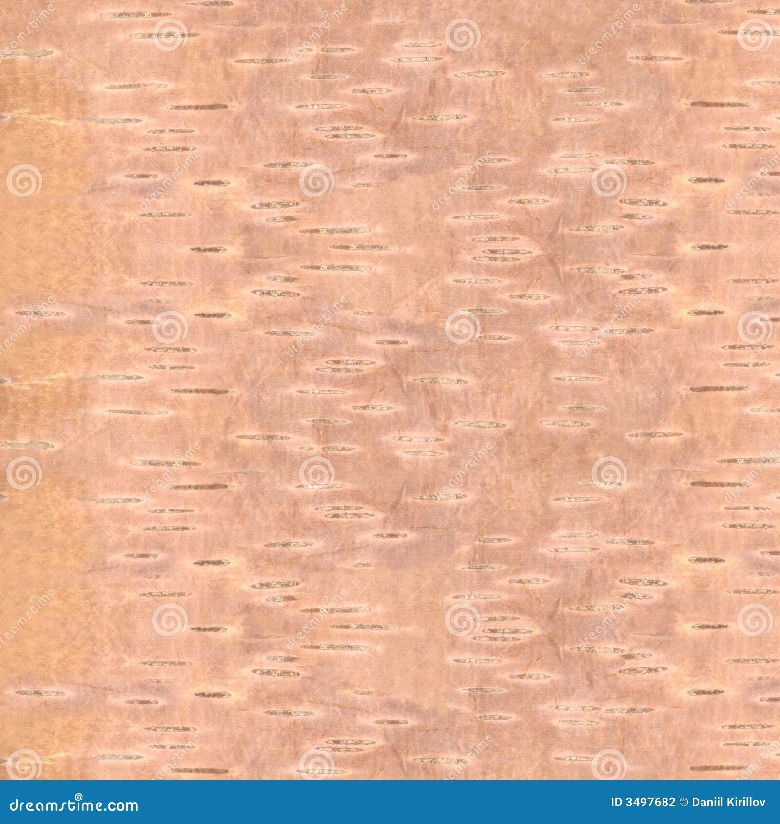 Textur för skällbjörkhq