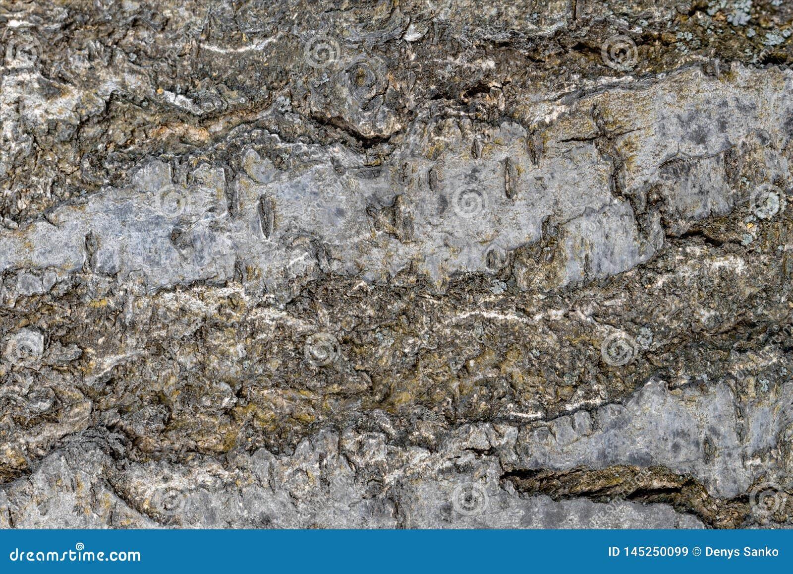Textur för tapetträdskäll, ett stycke av trä