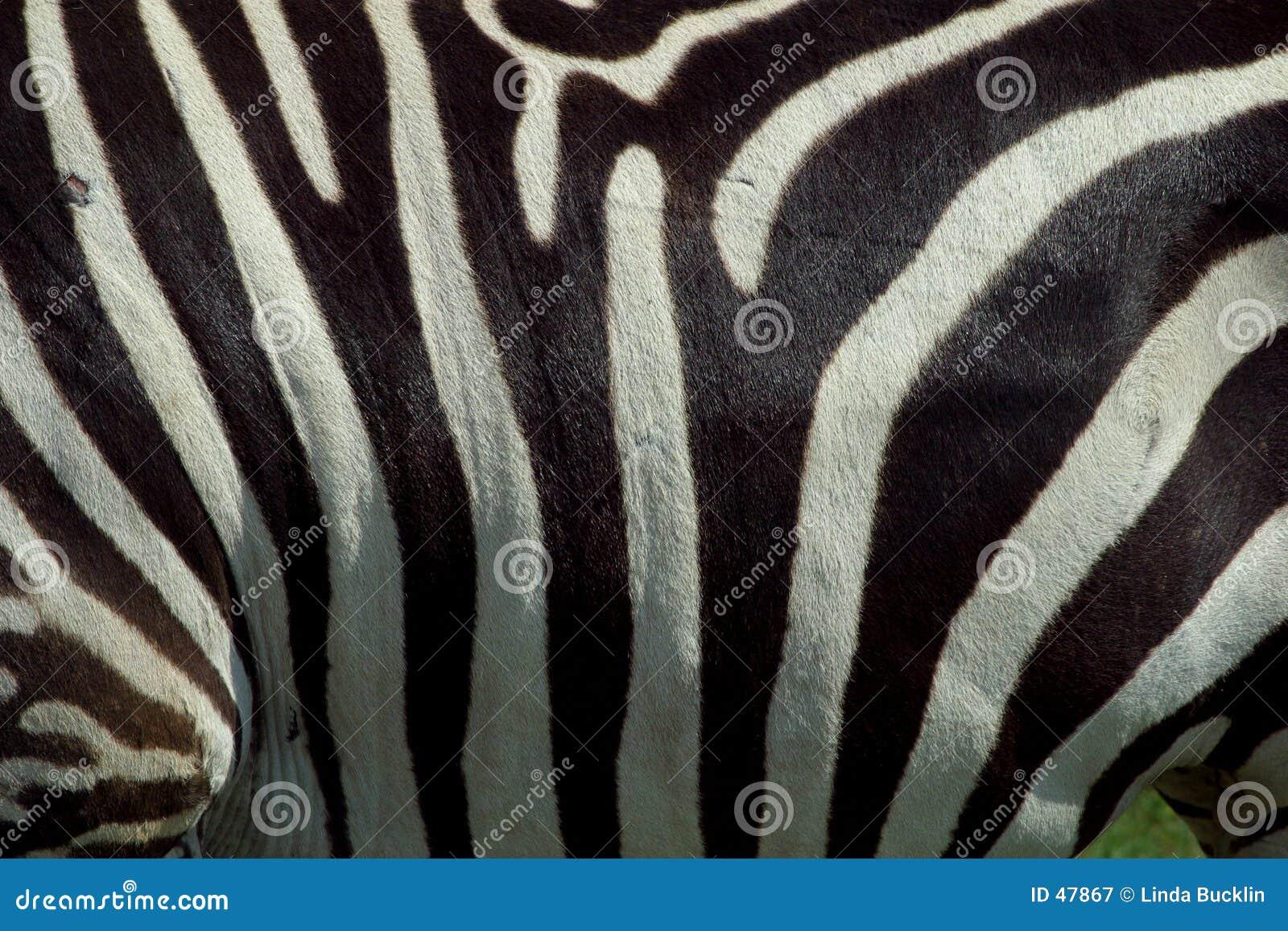 Textura 2 da zebra