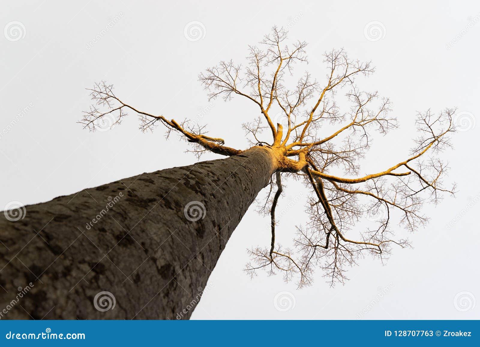 Textura abstrata da árvore