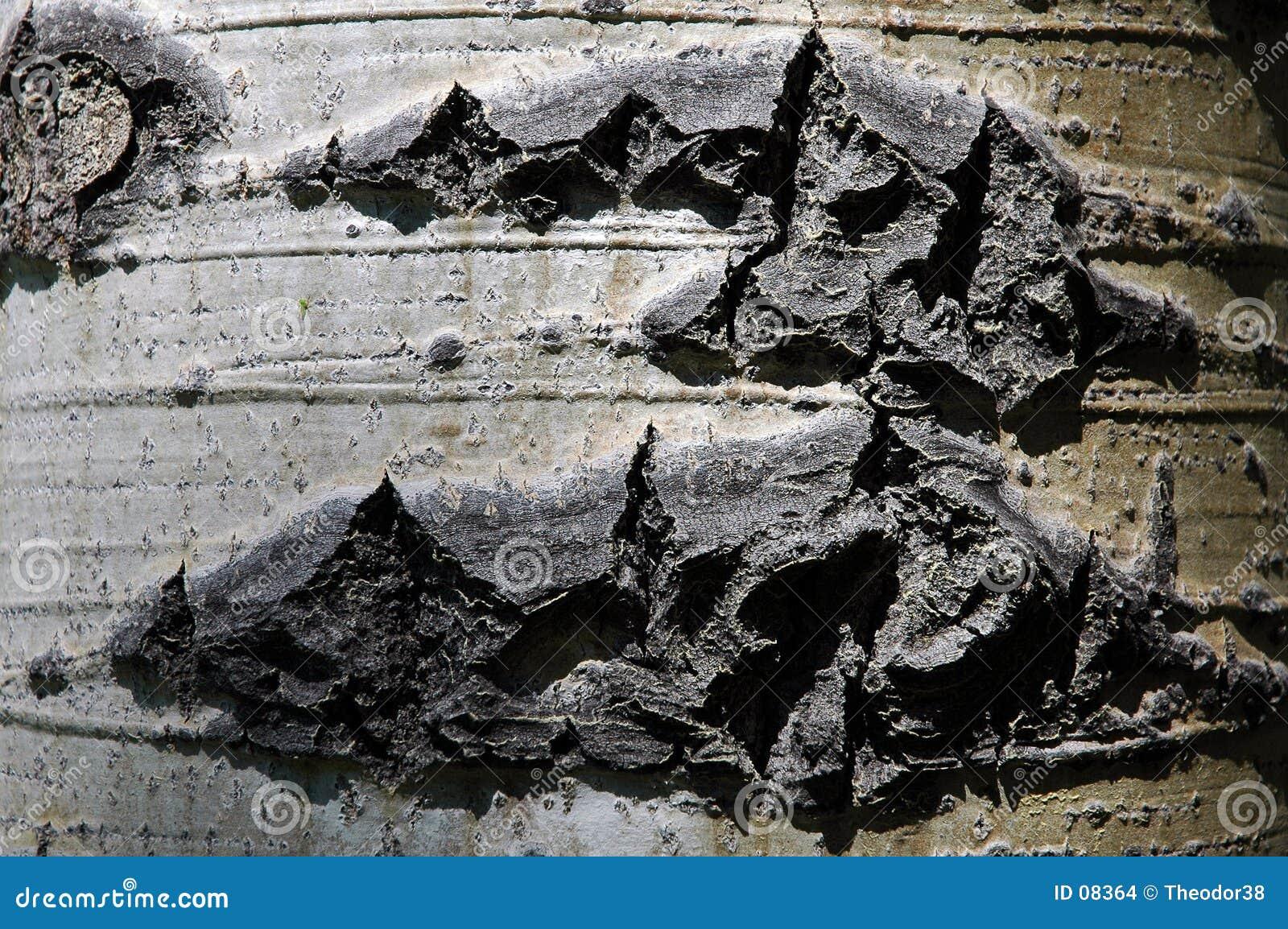 Textura da casca