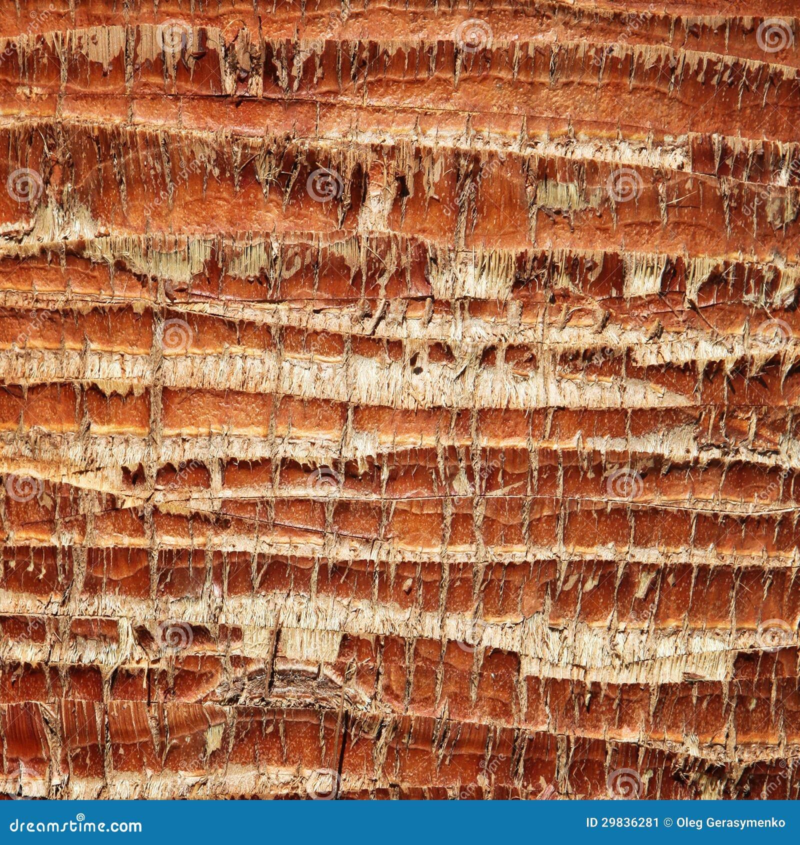 Textura da casca de palmeira