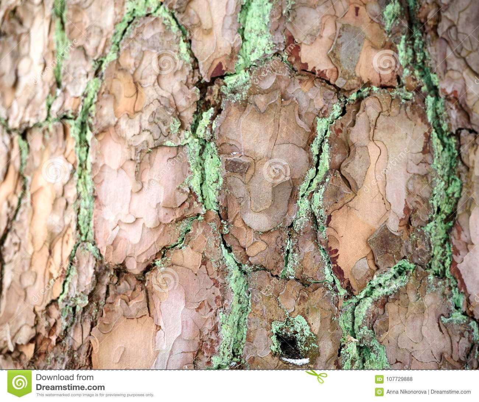 A textura da casca Imagem de fundo naughty