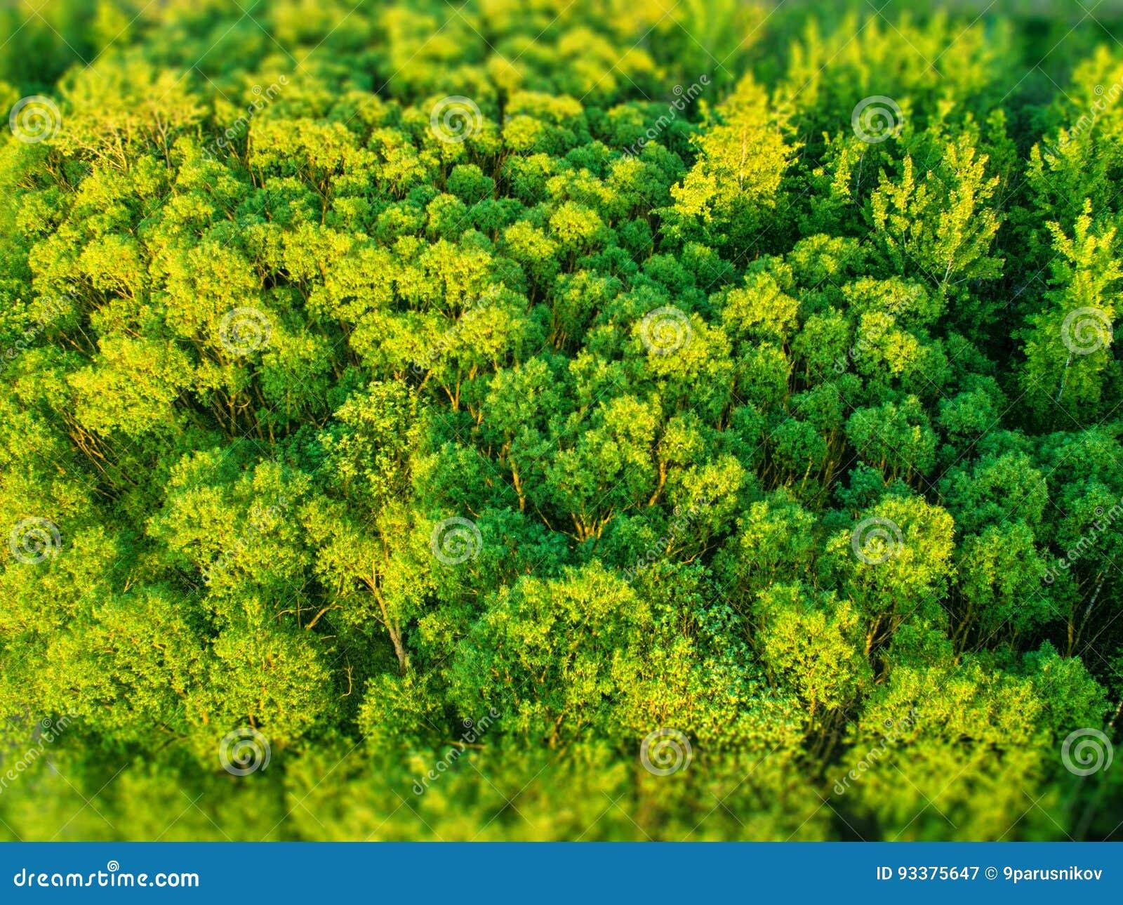A textura da floresta, a vista superior
