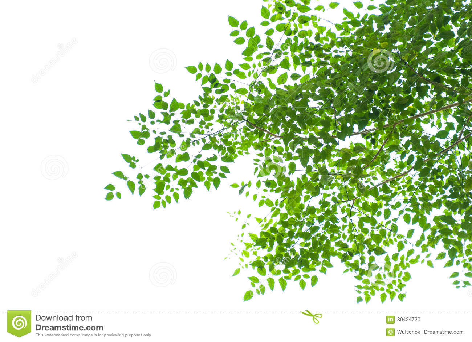 Textura da folha verde no fundo branco