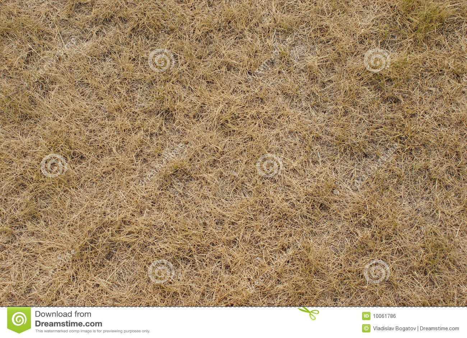 Textura da grama seca