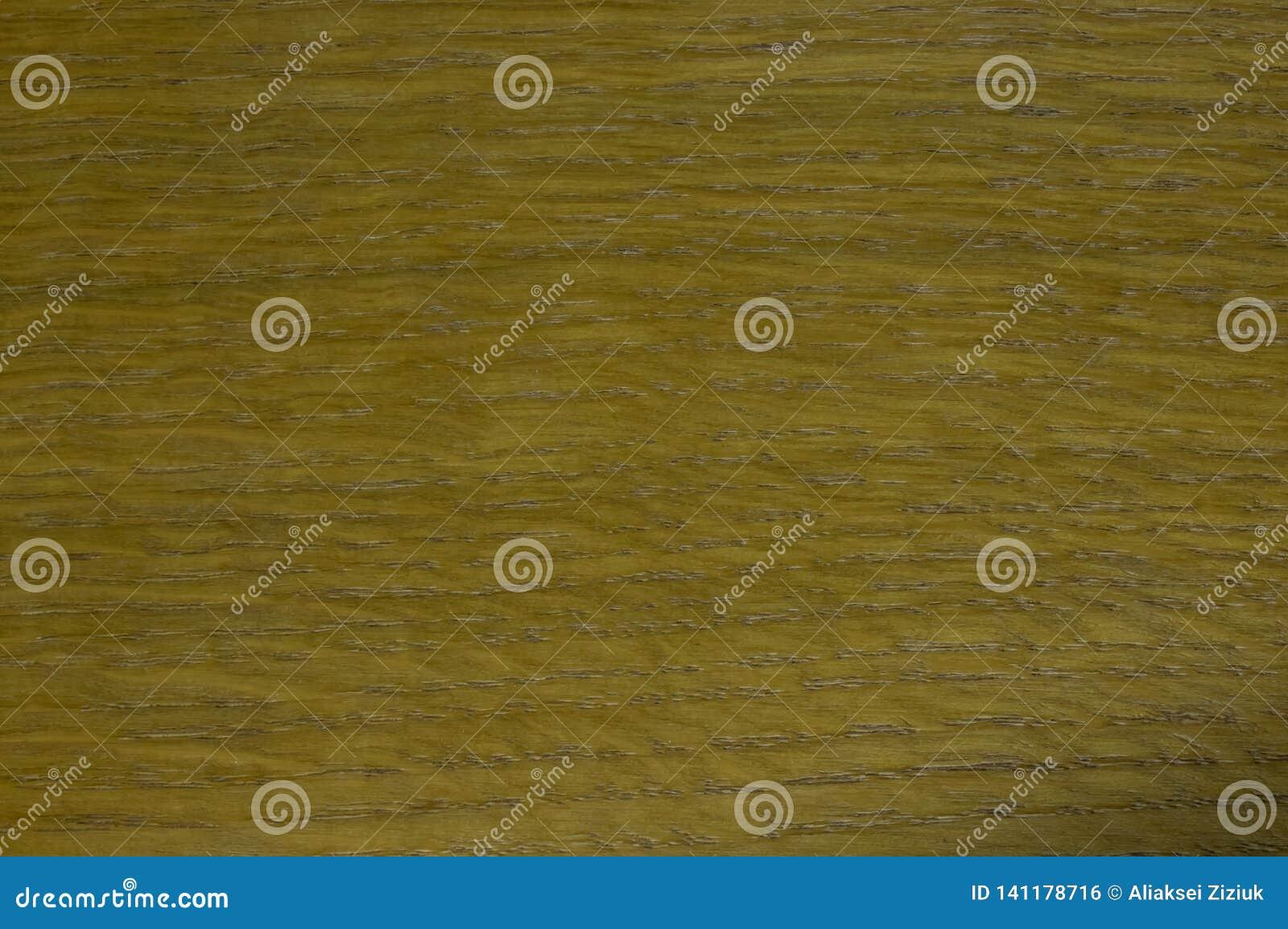 A textura da madeira, carvalho, envernizou