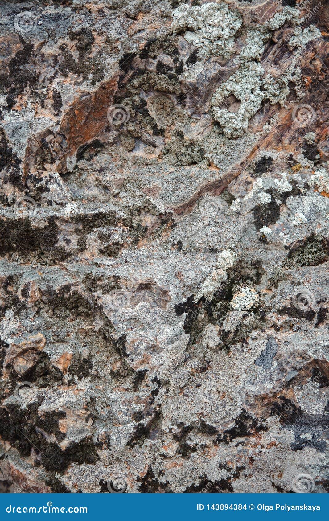 A textura da pedra marrom escura molhada com musgo Close-up da rocha