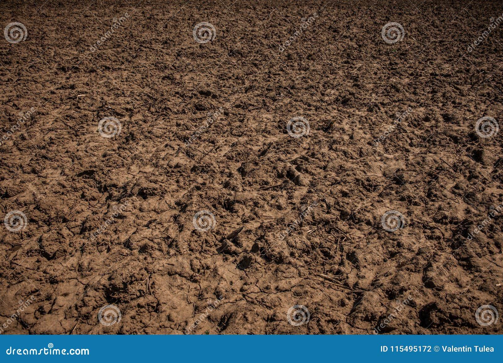 Textura da sujeira Textura da estrada de terra do país Terra Unworked, campo