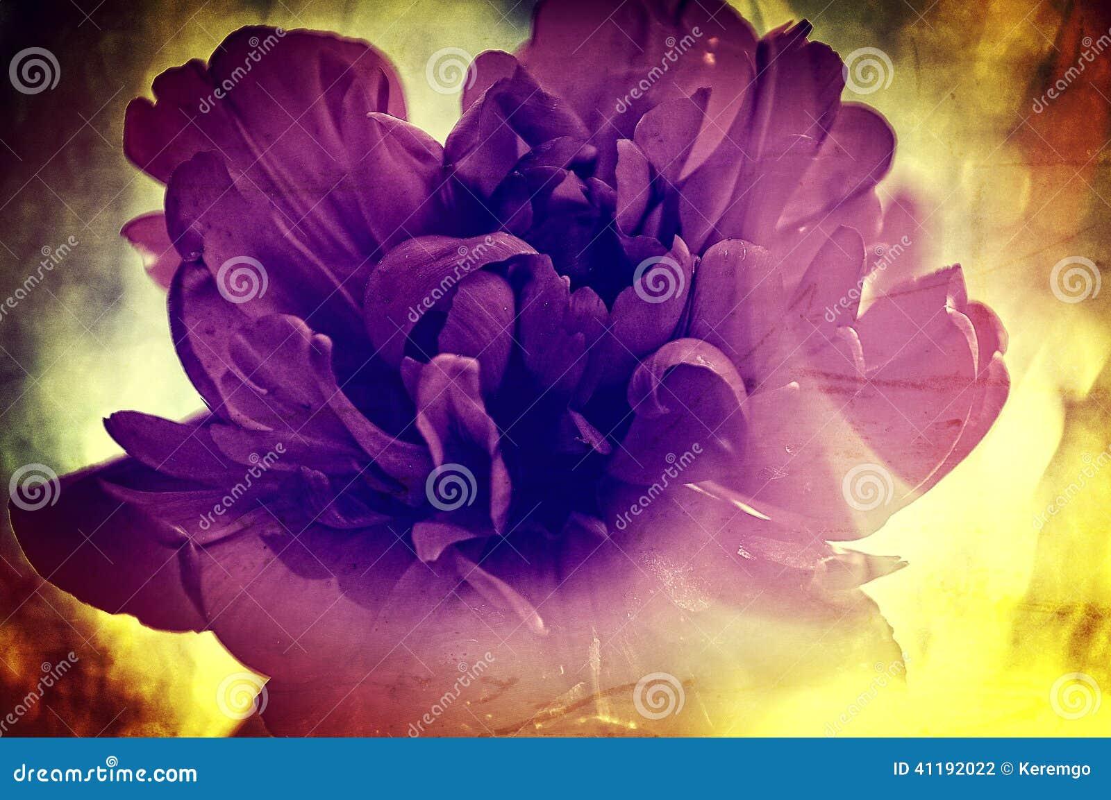 Textura de la flor del vintage