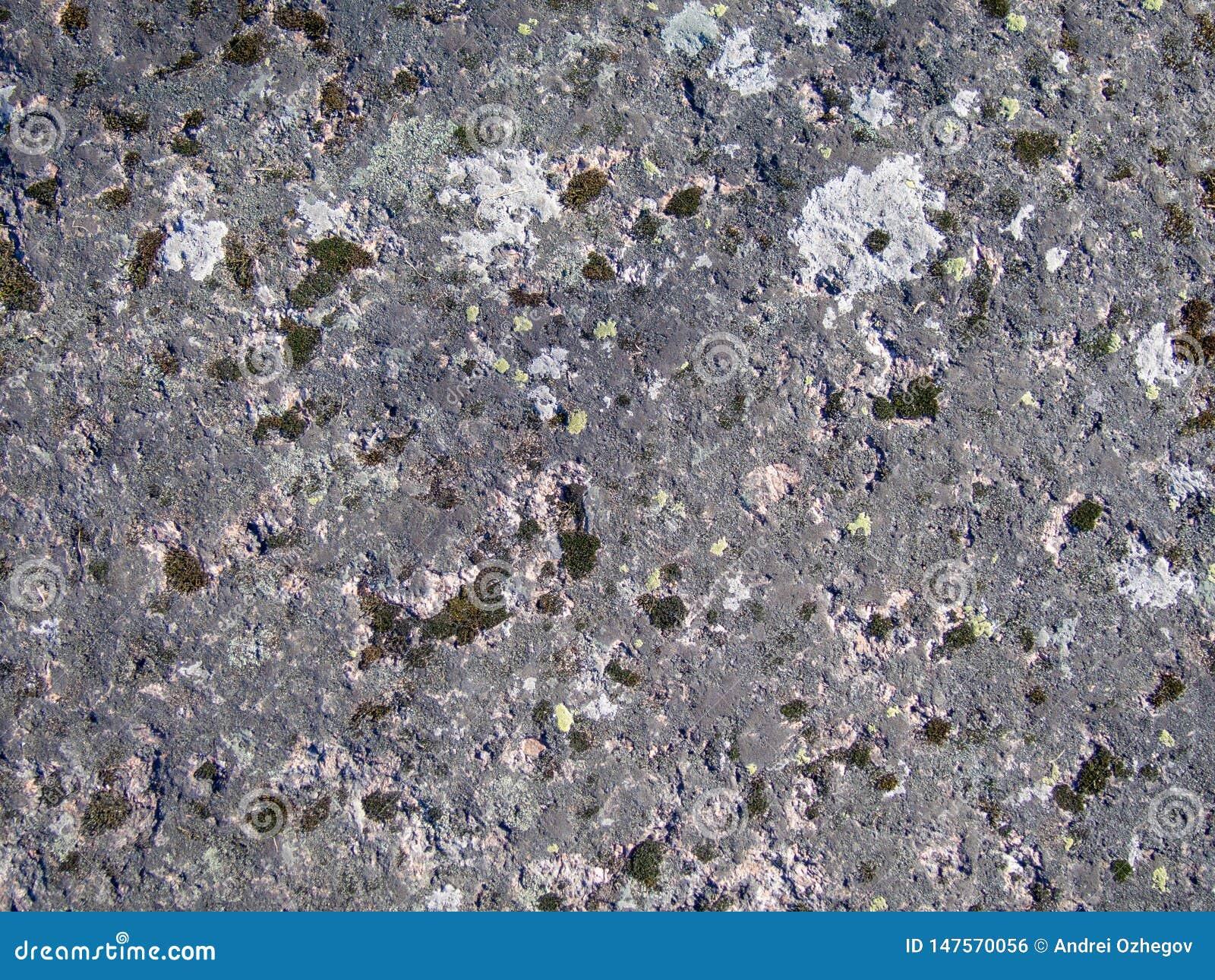 Textura de la piedra cubierta de musgo natural vieja