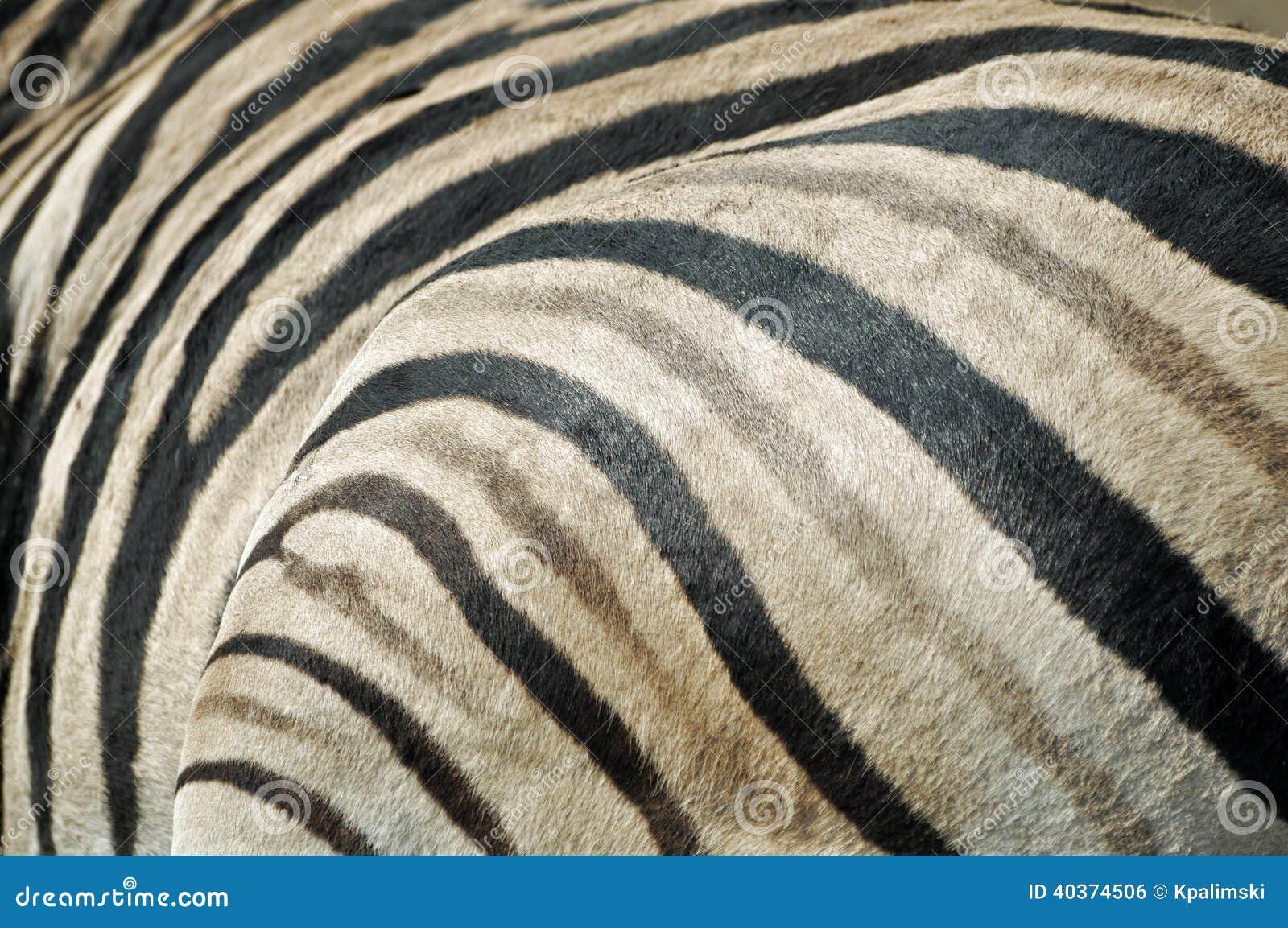 Textura de la piel de la cebra