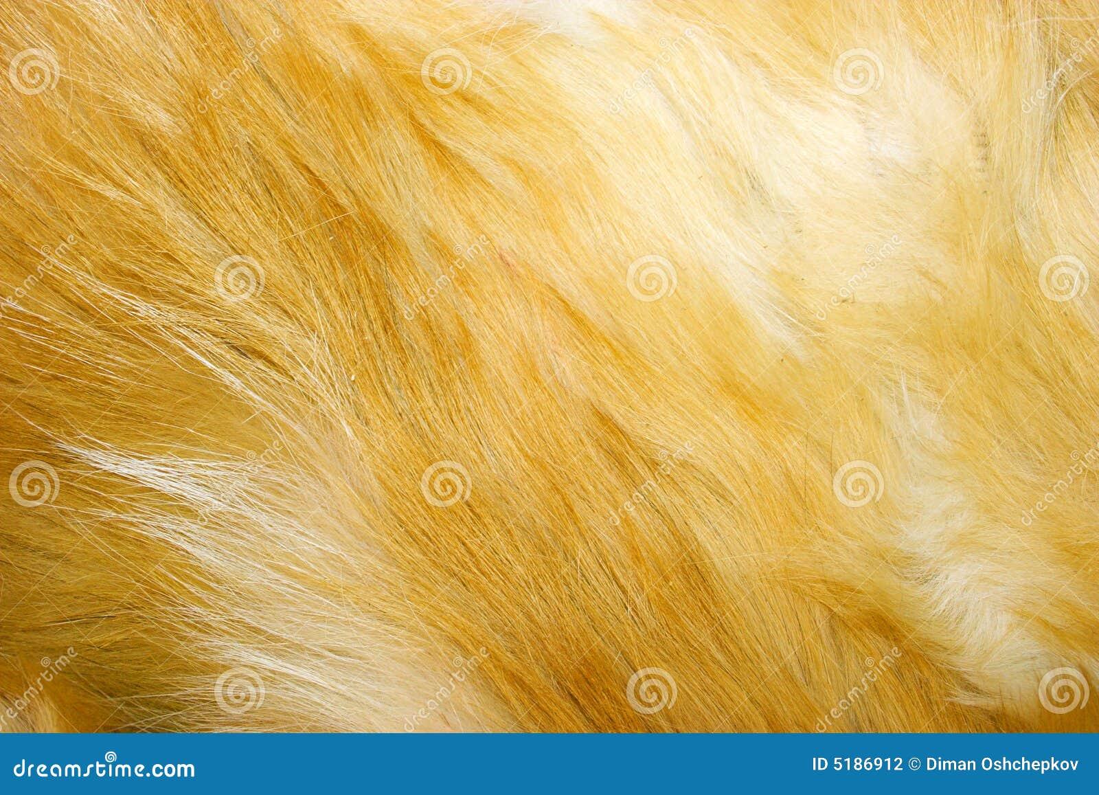 Textura de la piel de zorro rojo