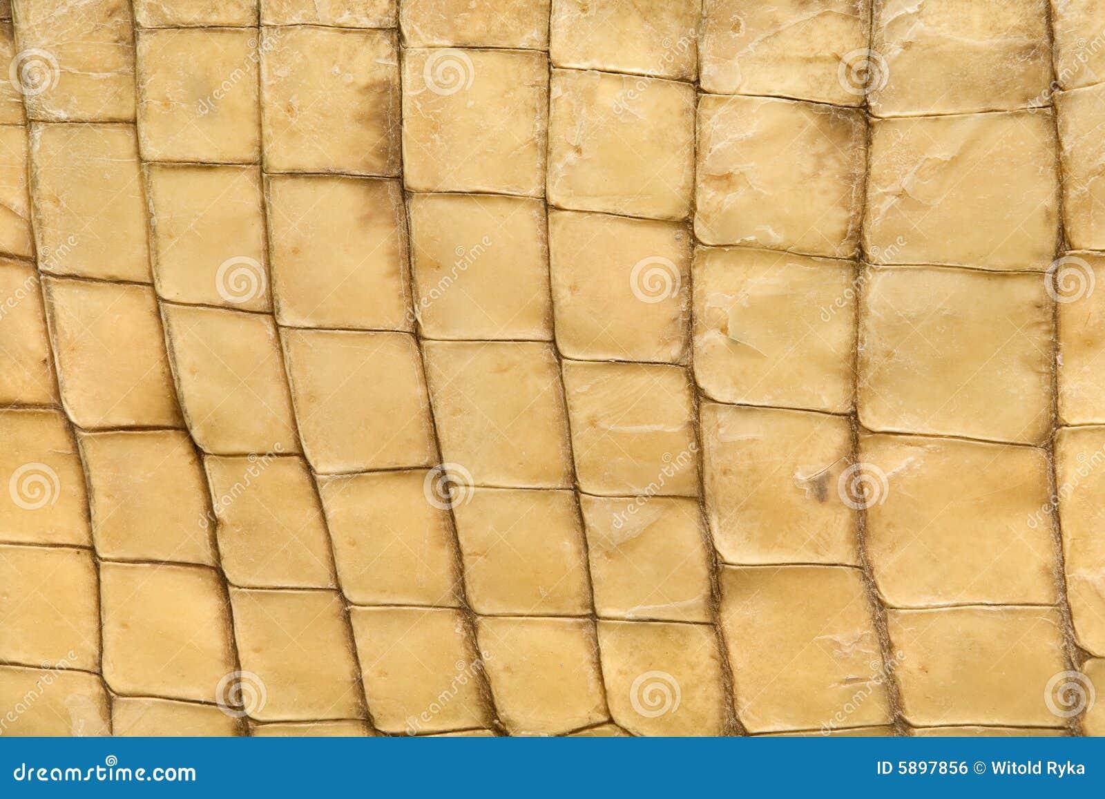 Textura de la piel del cocodrilo