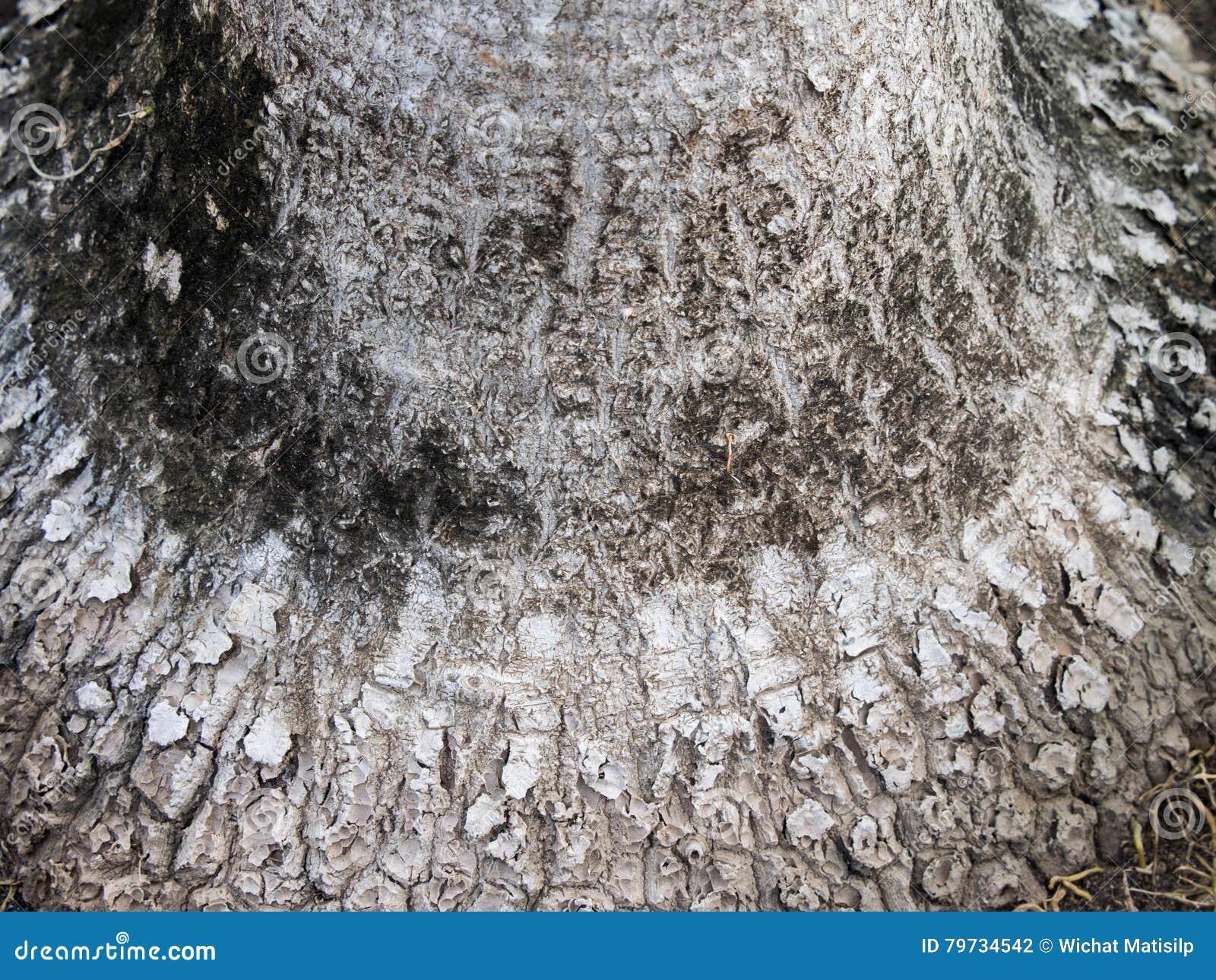 Textura de la planta del tronco de la cola de Pony's