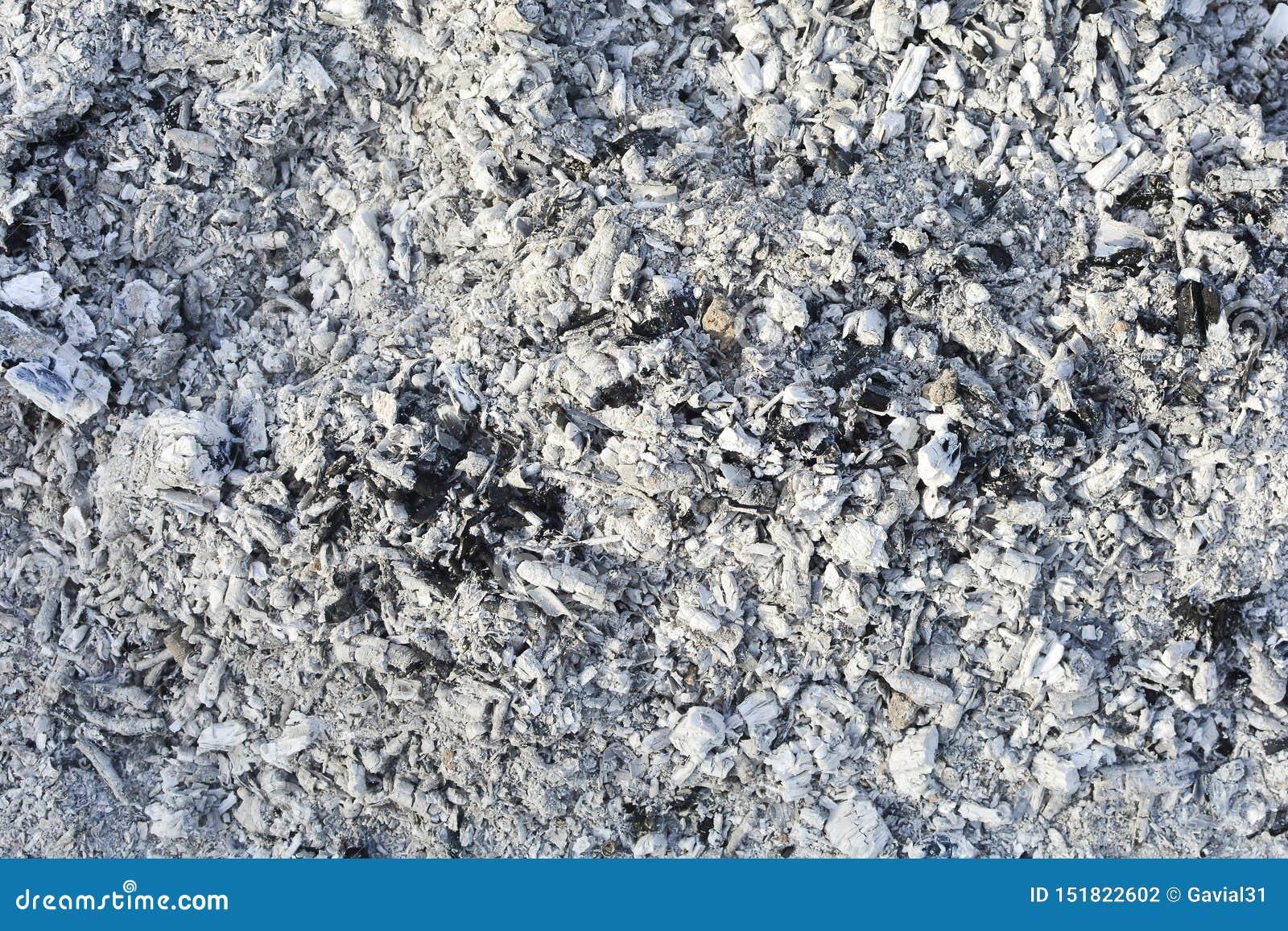 Textura de las cenizas Fondo gris natural de la madera quemada Carbones quemados