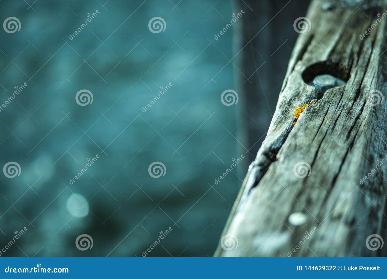 Textura de madeira áspera do molhe velho