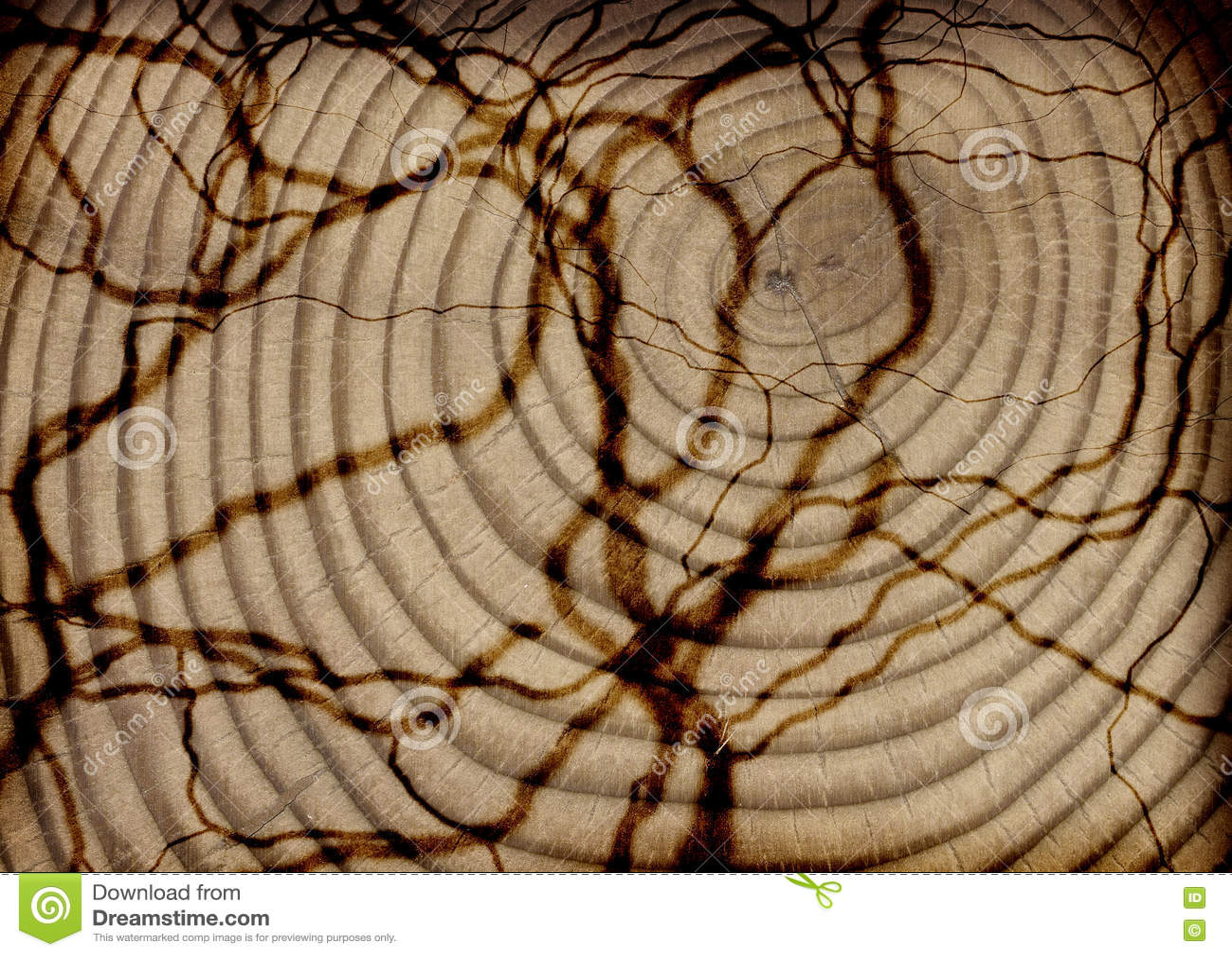 Textura de madeira do corte